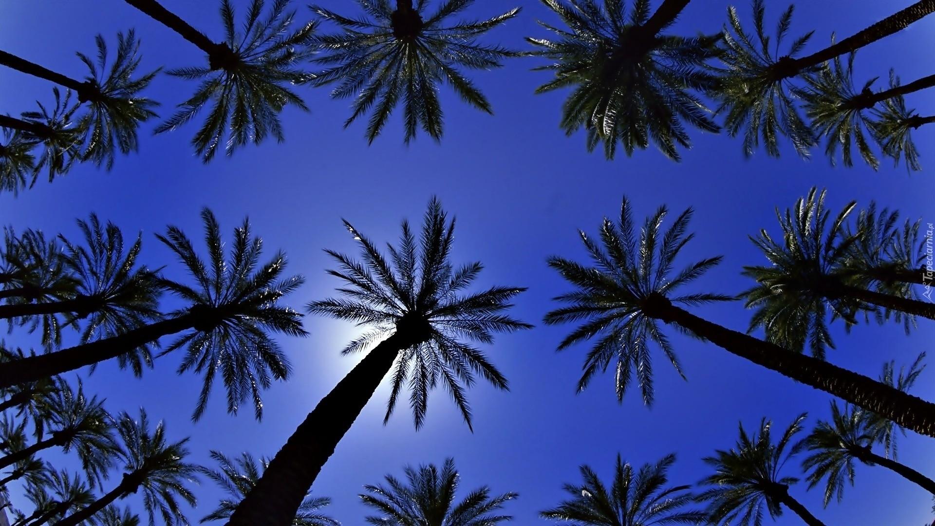 Palm Tree hd desktop wallpaper