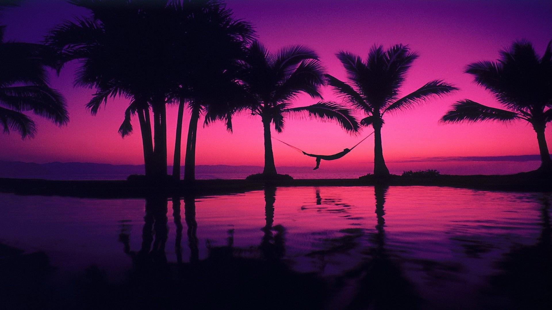 Palm Tree hd wallpaper download