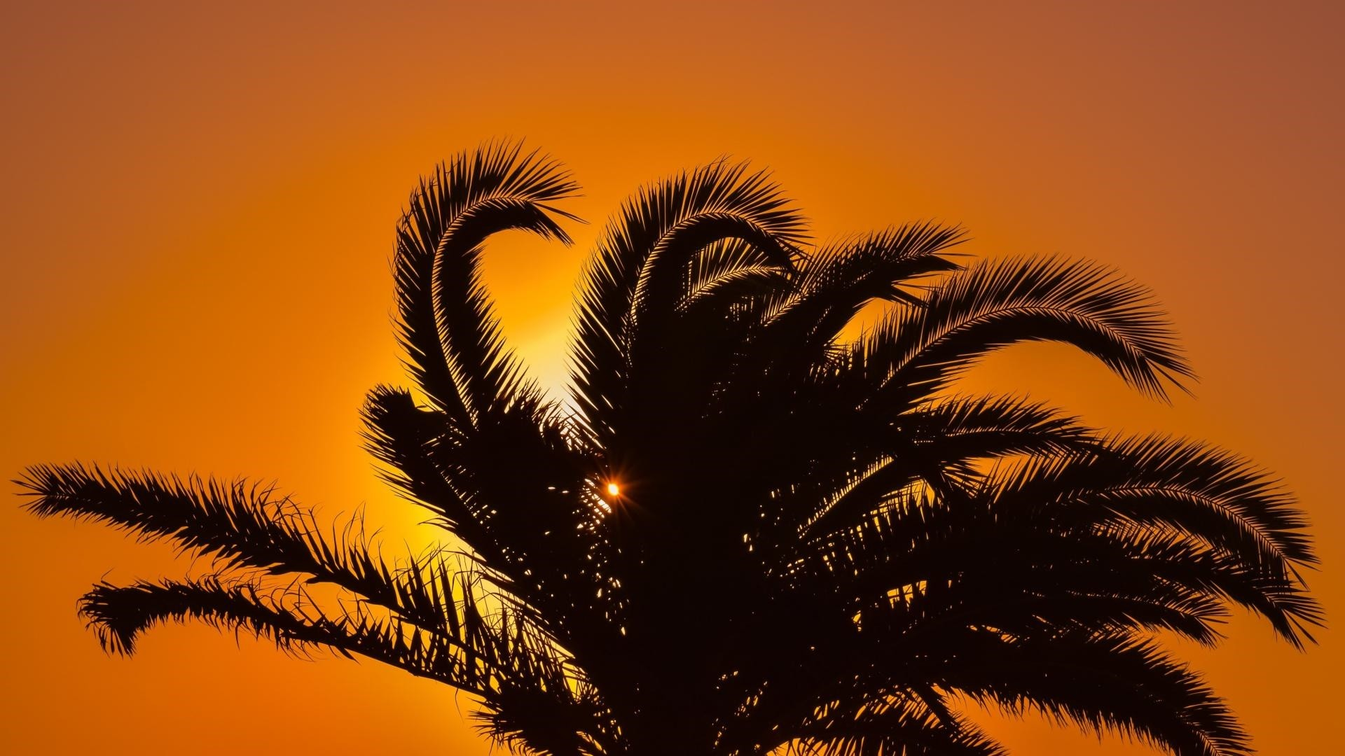 Palm Tree Wallpaper and Background