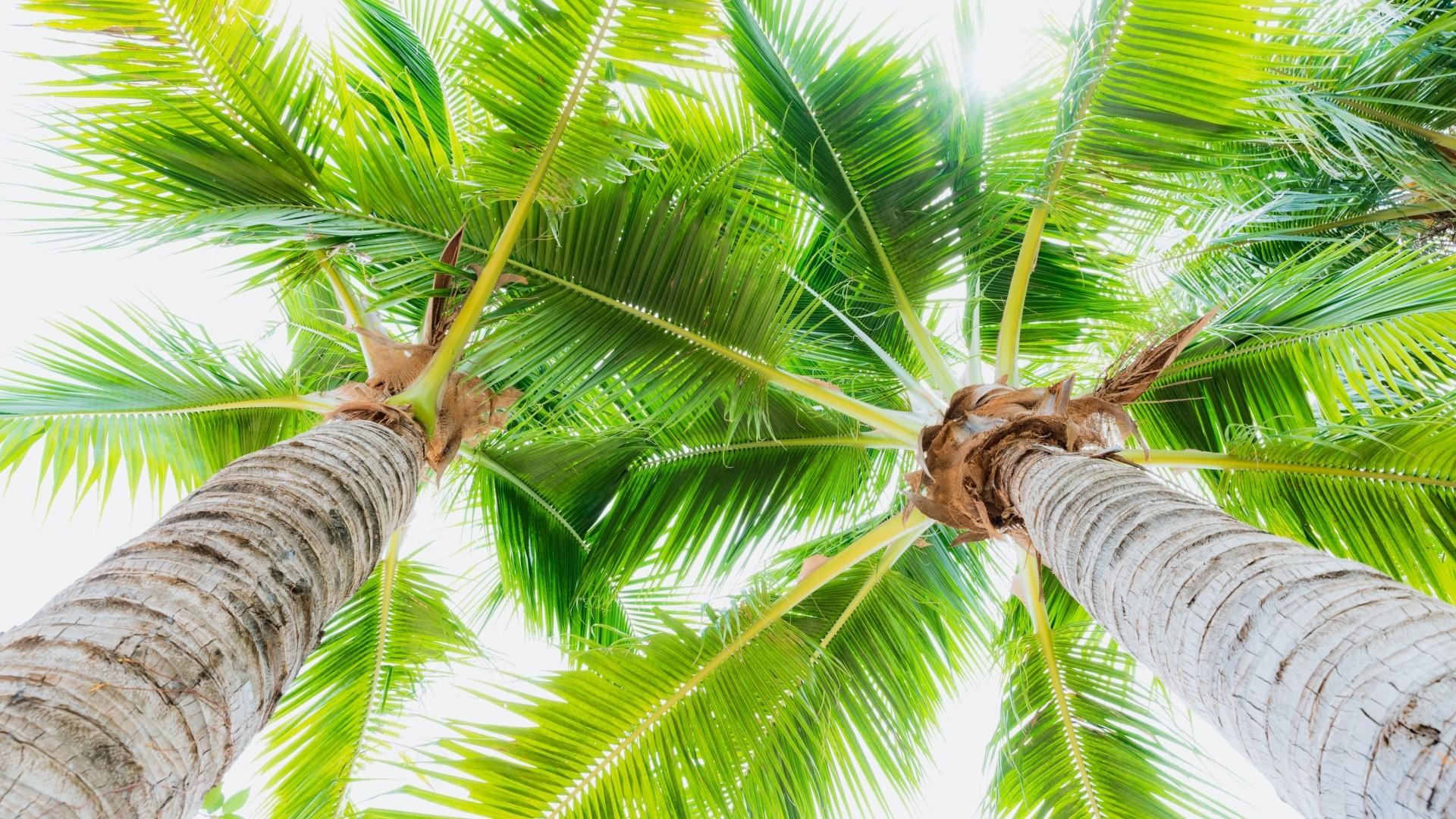 Palm Tree Full HD Wallpaper