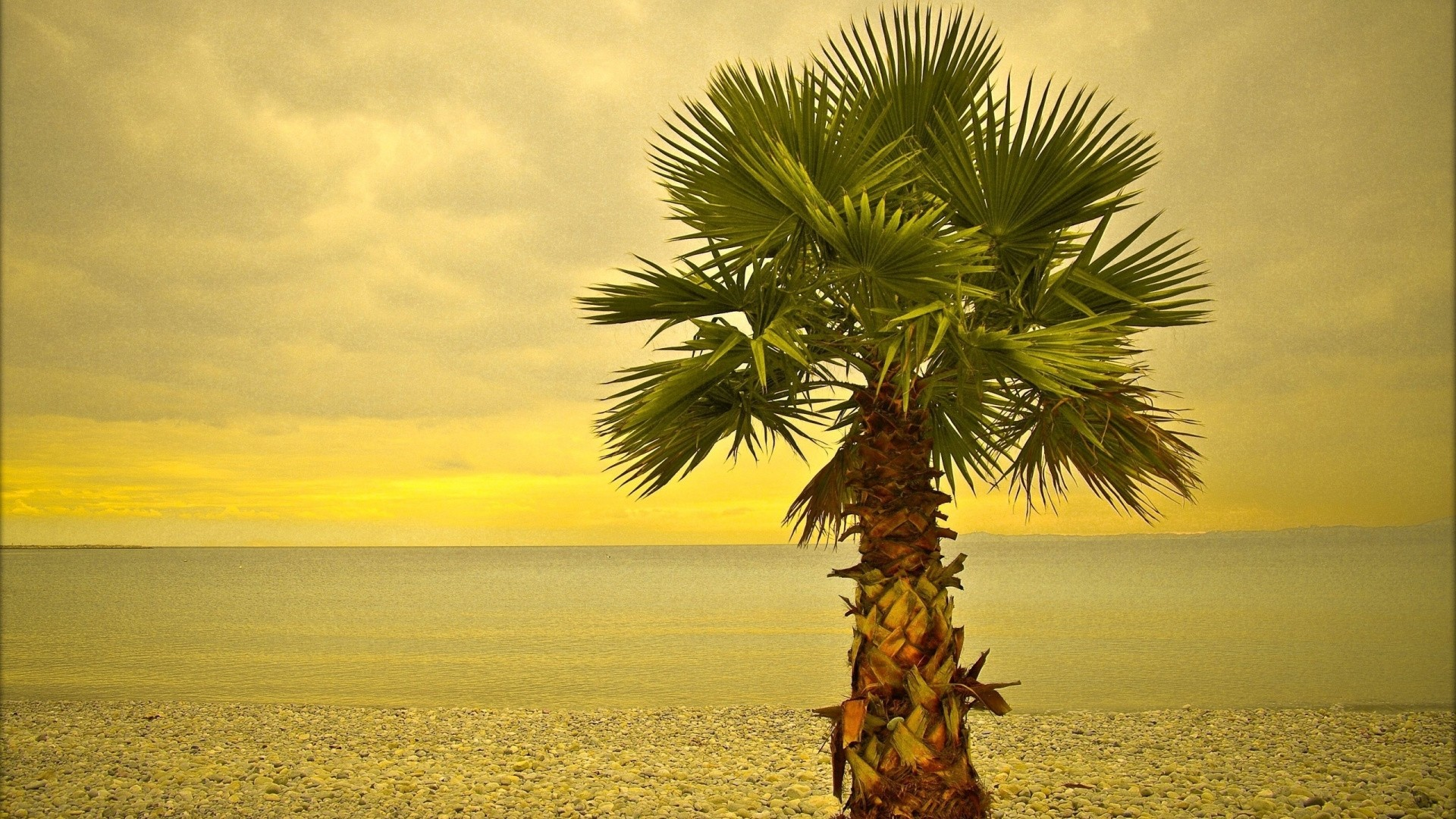 Palm Tree Background Wallpaper