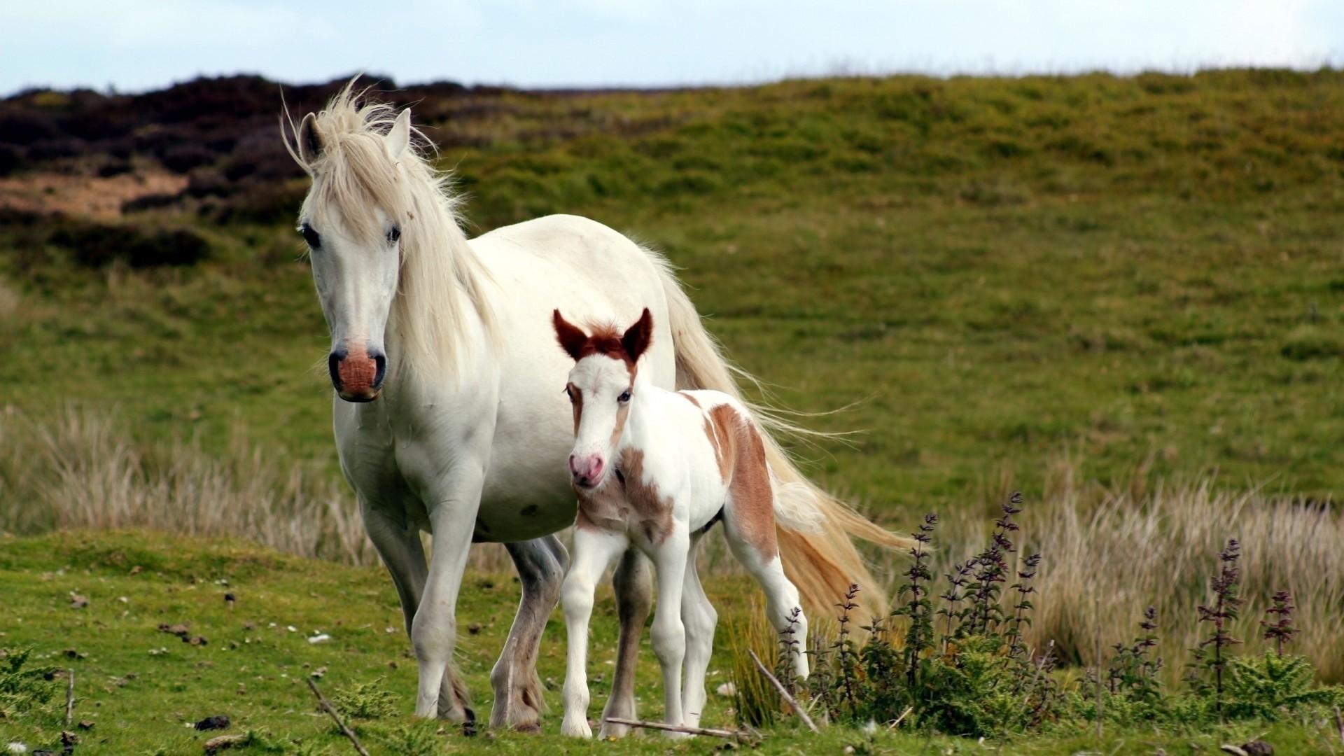 White Horse Pic