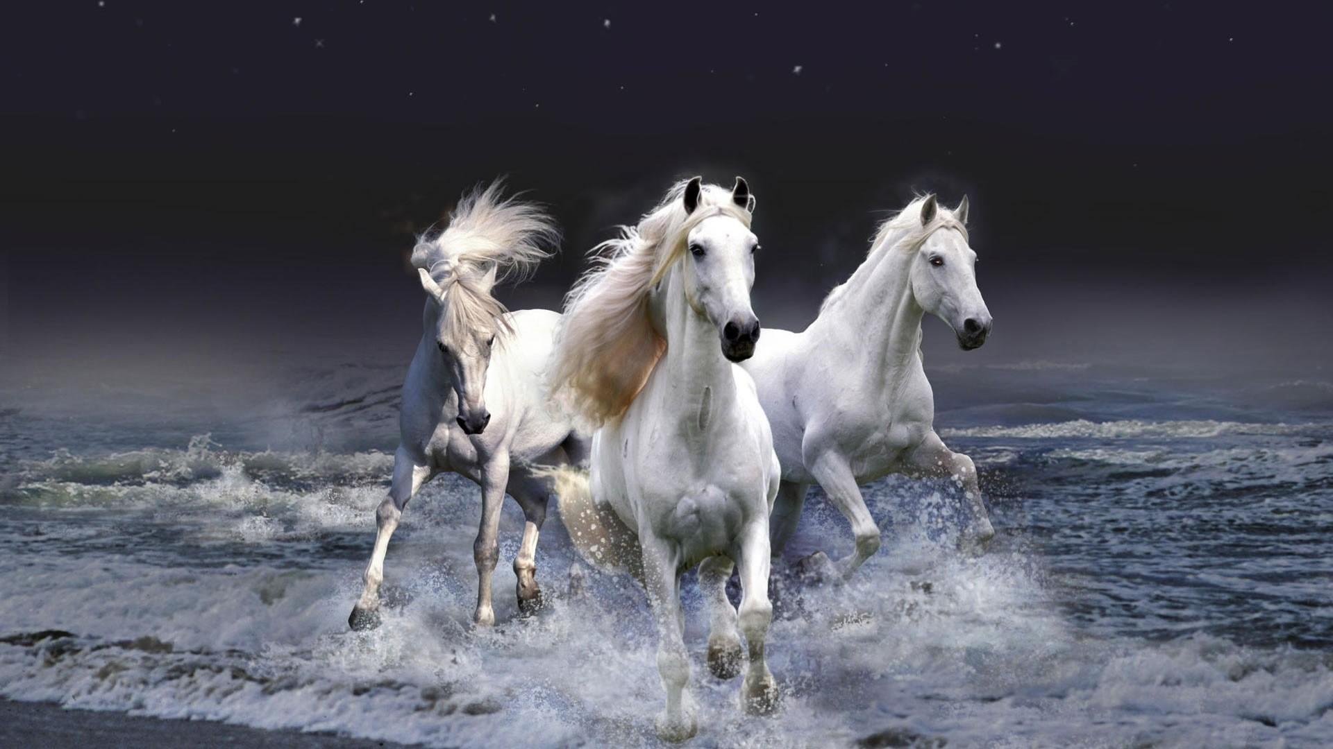 White Horse Wallpaper for pc