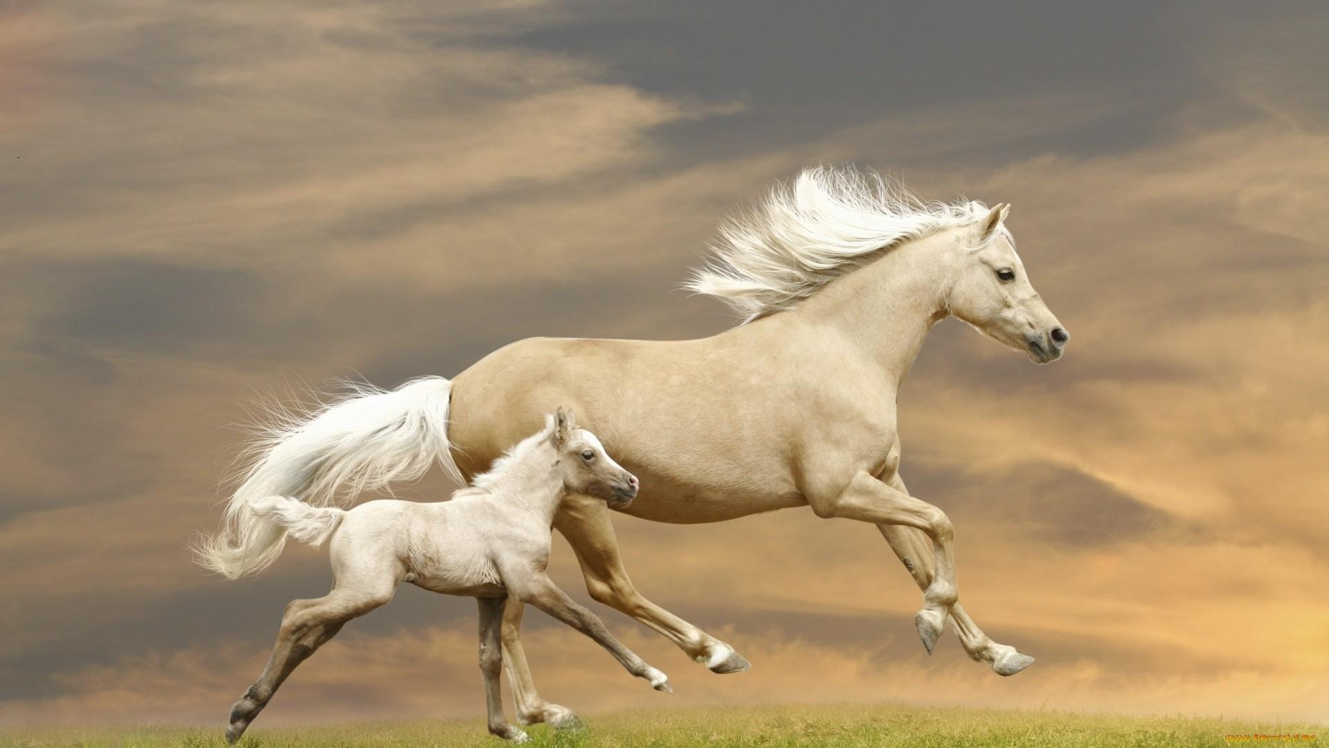 White Horse Full HD Wallpaper
