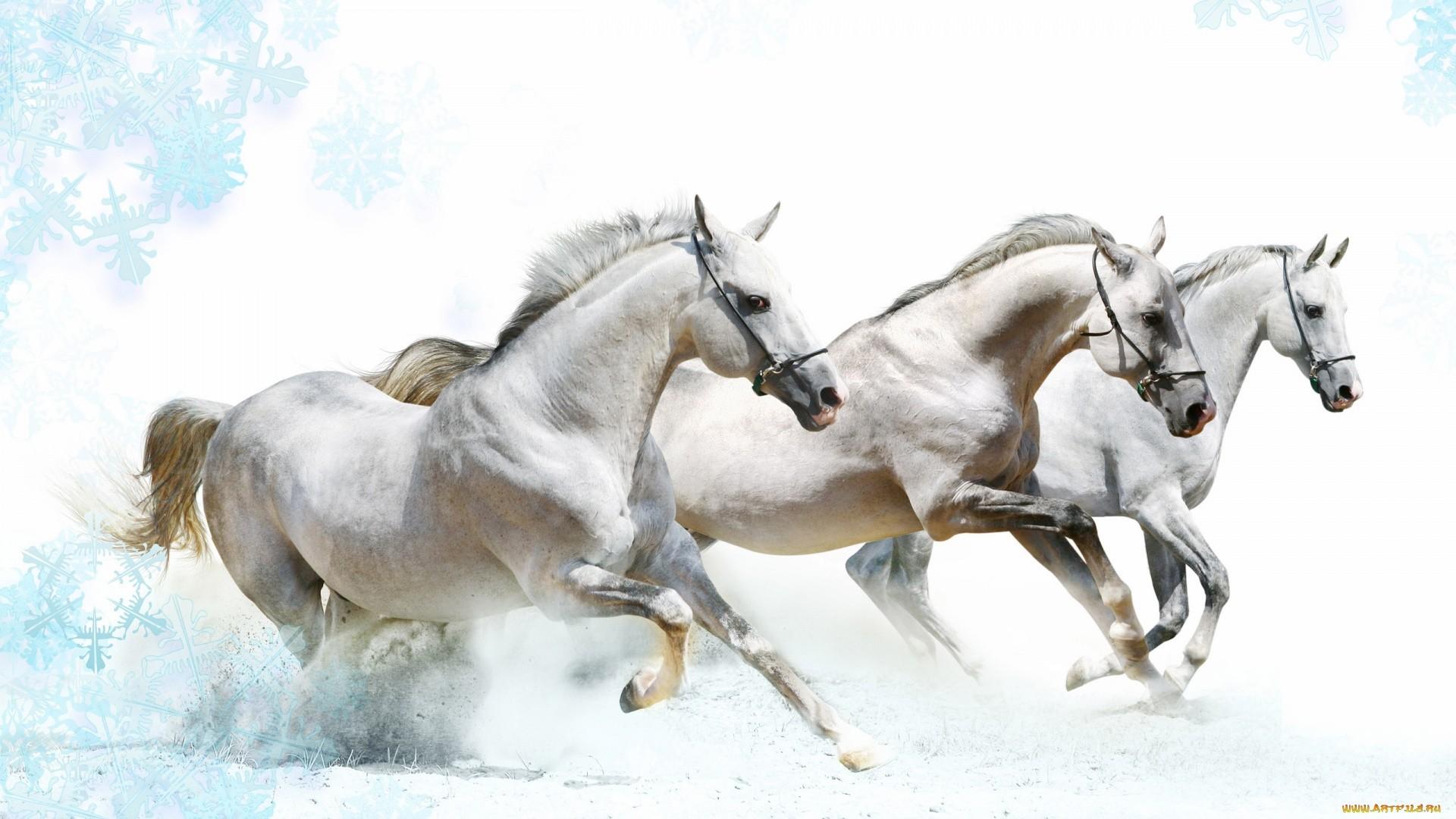 White Horse hd wallpaper download