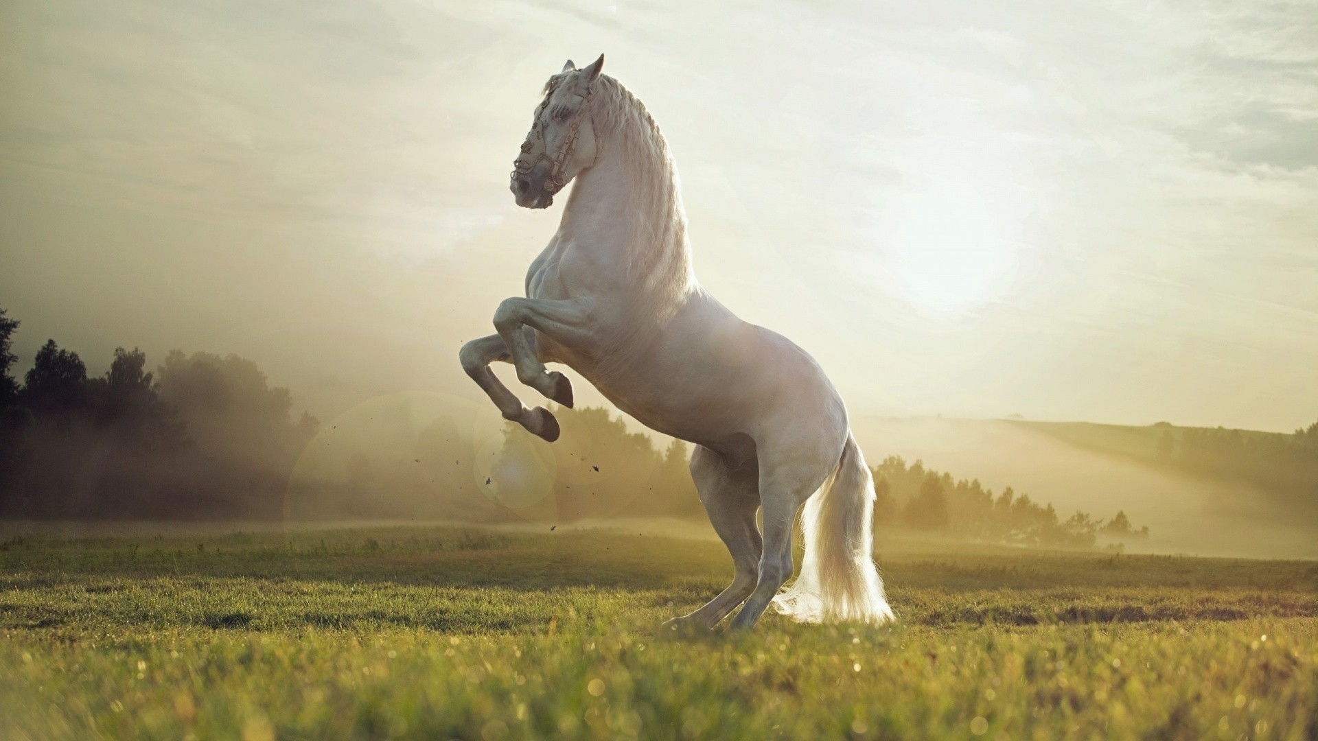 White Horse HD Download