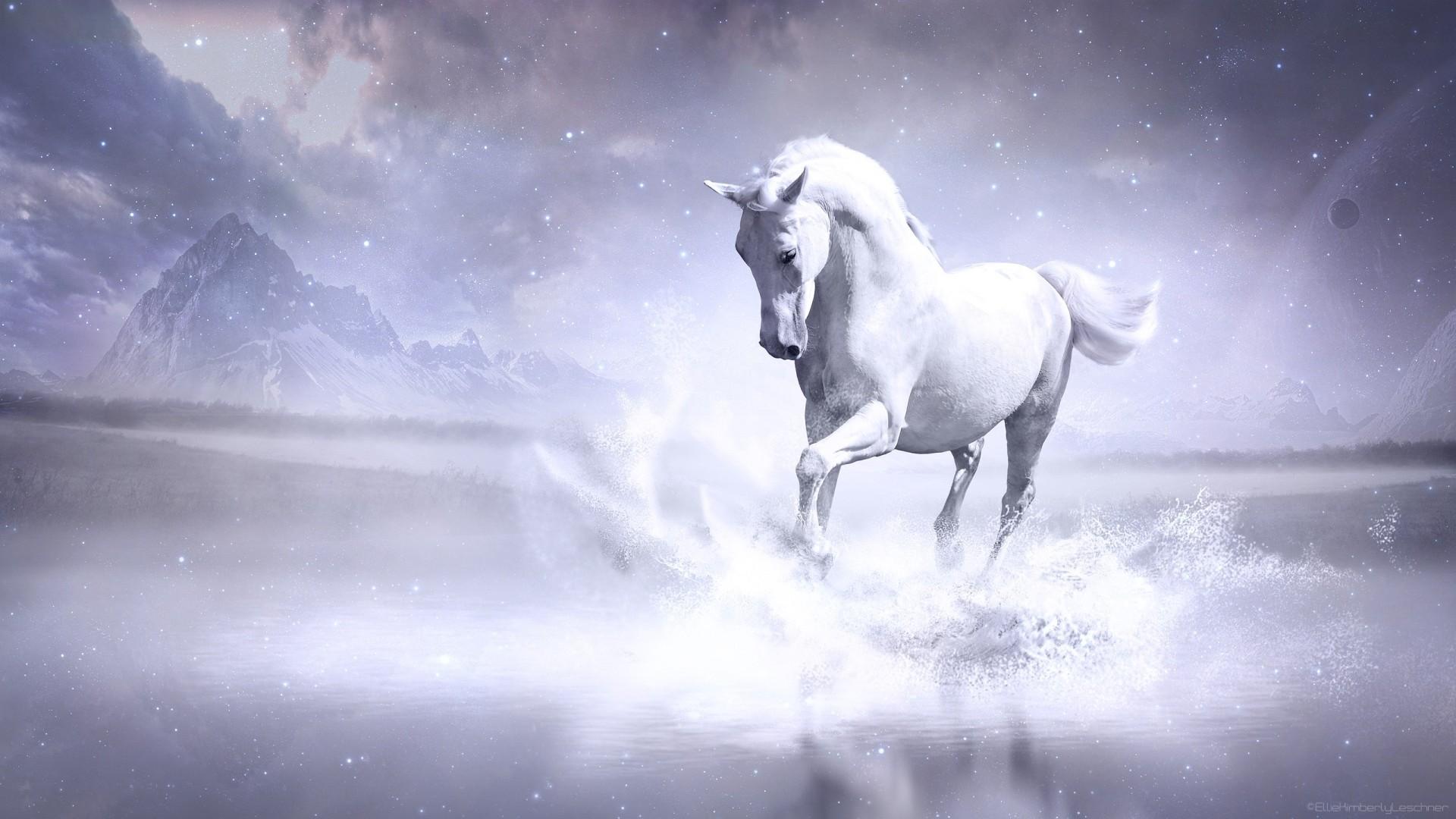 White Horse Background Wallpaper