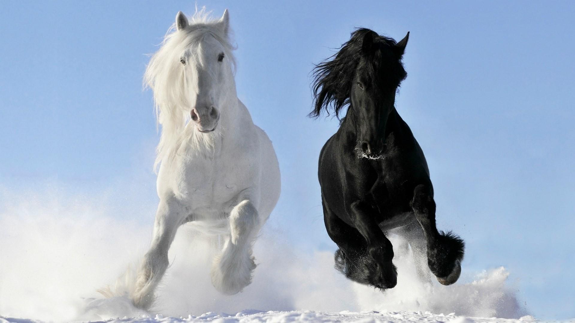 White Horse wallpaper photo hd