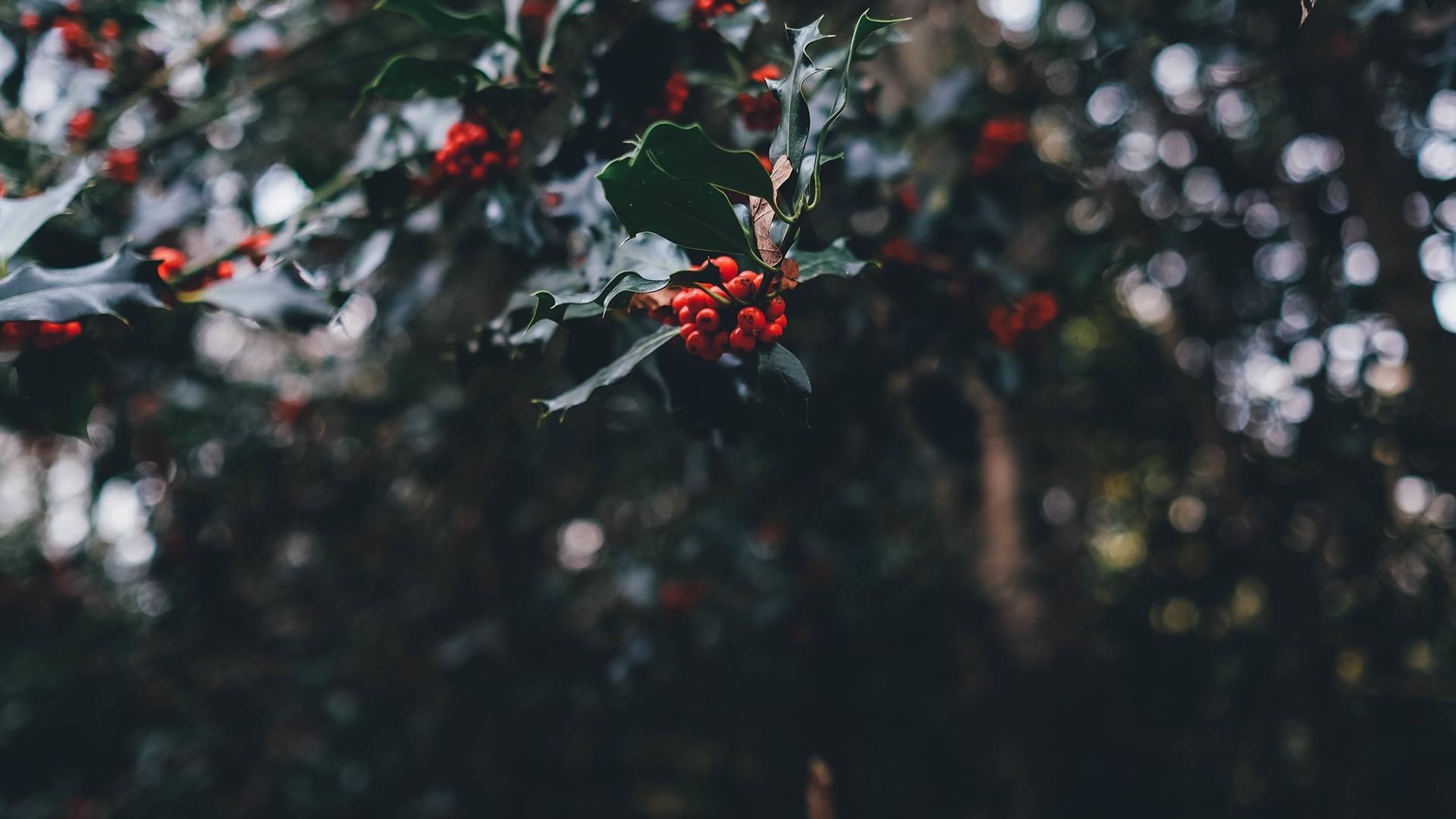 Aesthetic Christmas Background