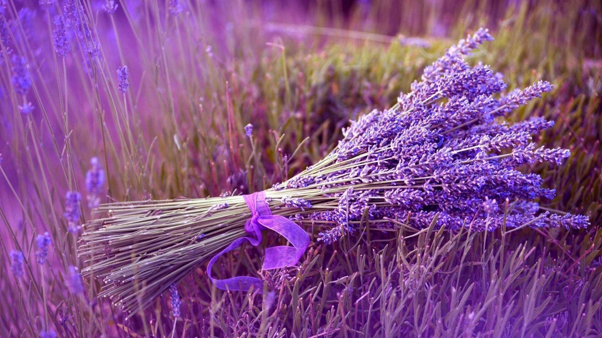 Lavender HD Download