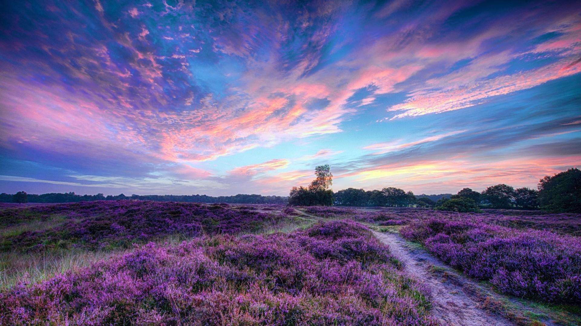 Lavender Wallpaper theme