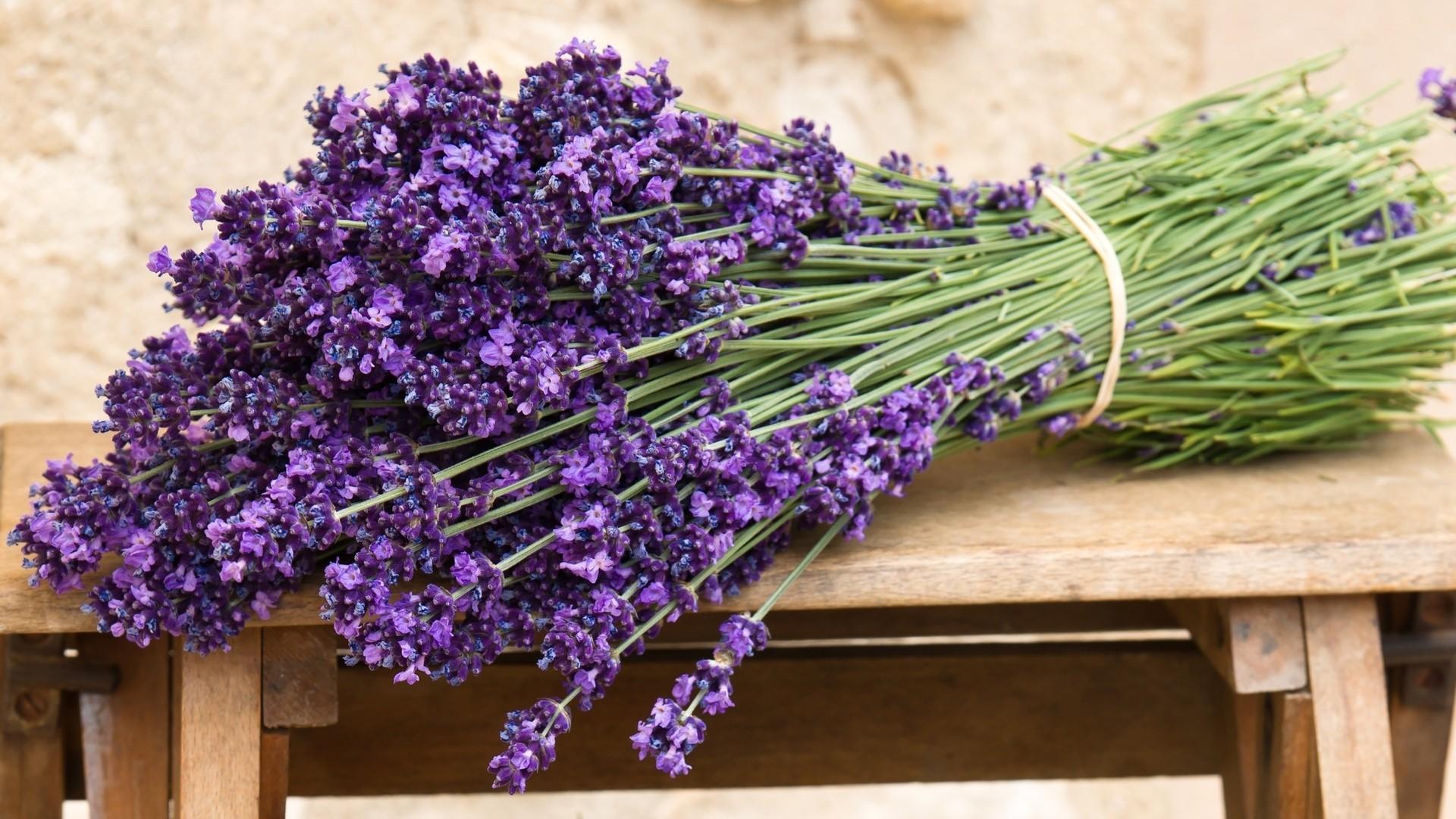Lavender Free Wallpaper