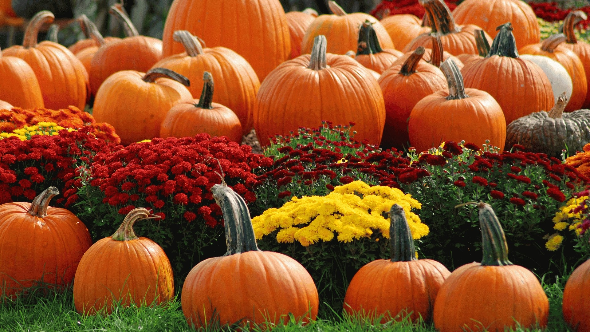 Pumpkin Background Wallpaper