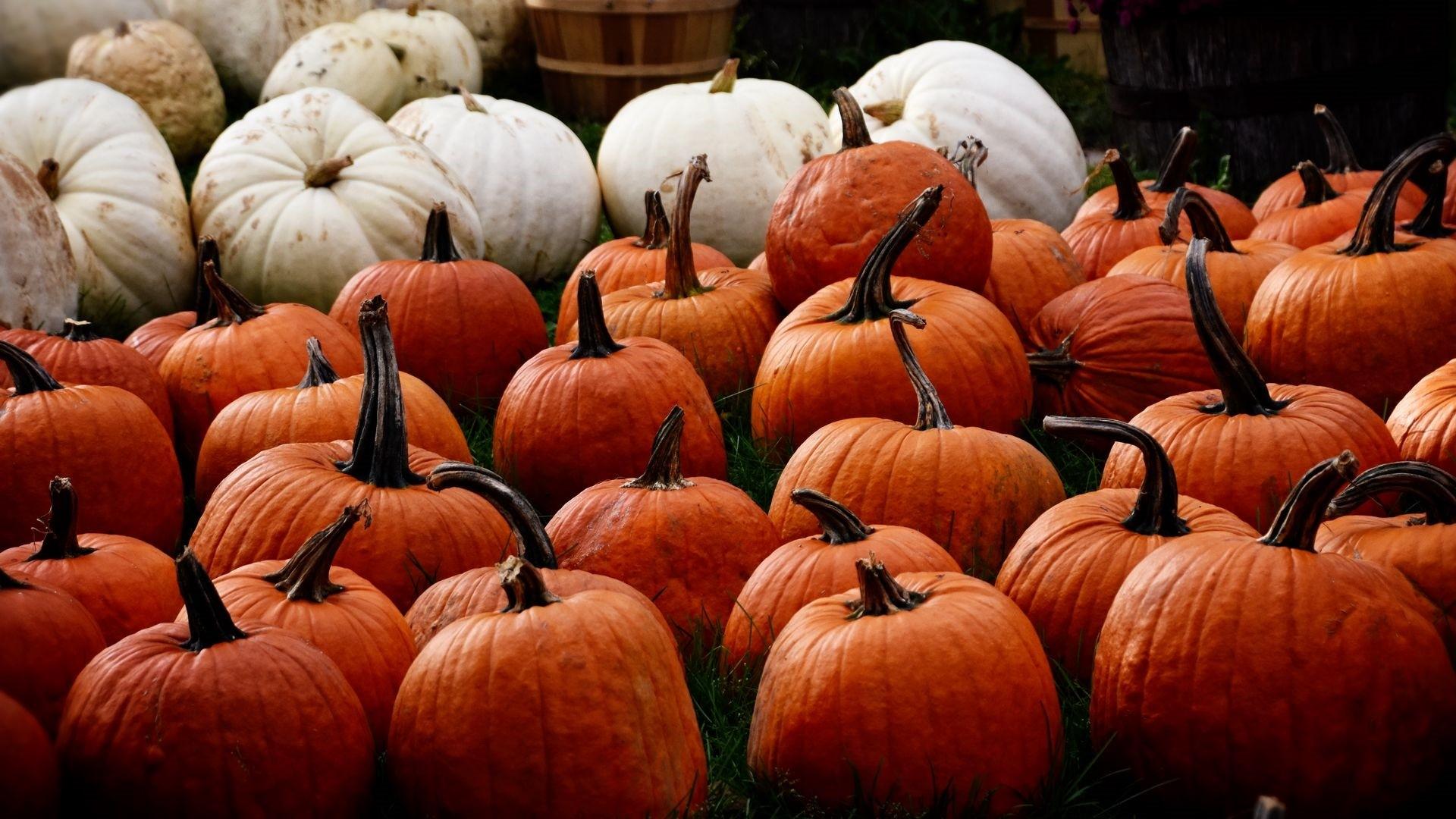 Pumpkin a wallpaper