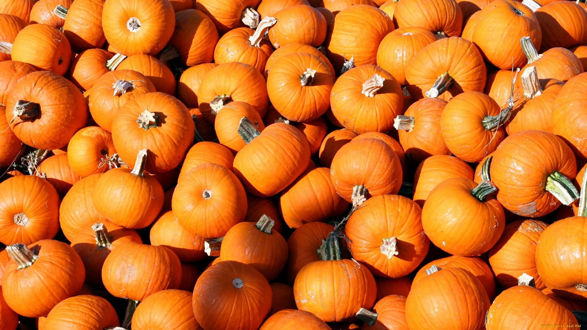Pumpkin hd wallpaper download