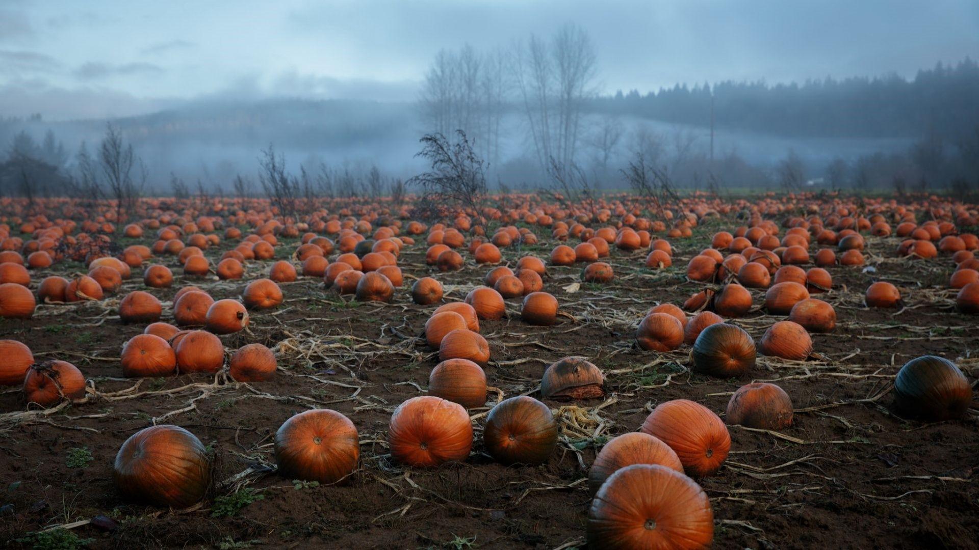 Pumpkin Wallpaper for pc