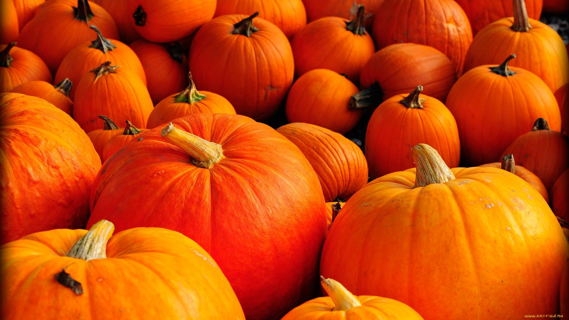 Pumpkin PC Wallpaper HD
