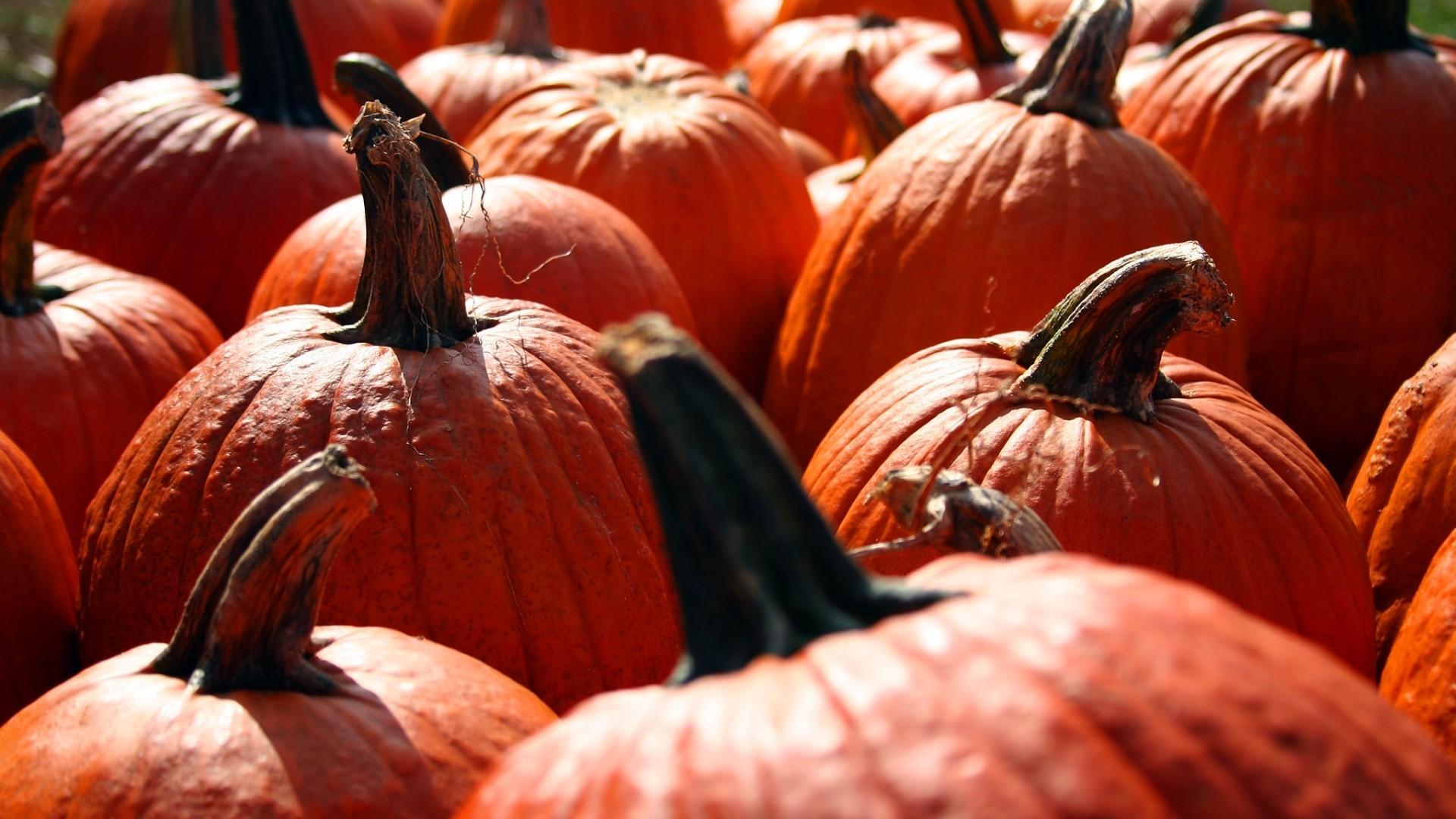 Pumpkin HD Wallpaper