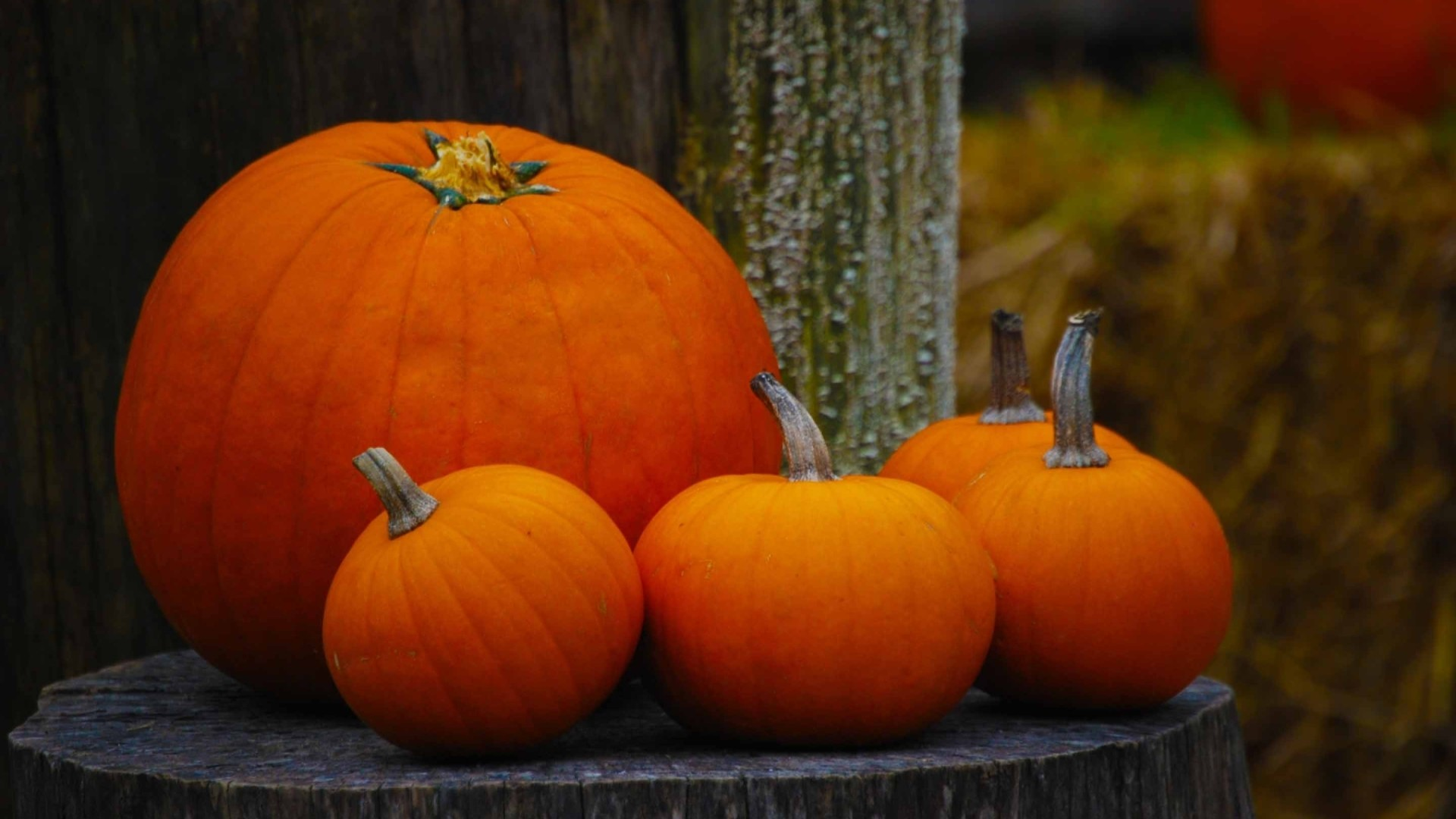 Pumpkin Download Wallpaper