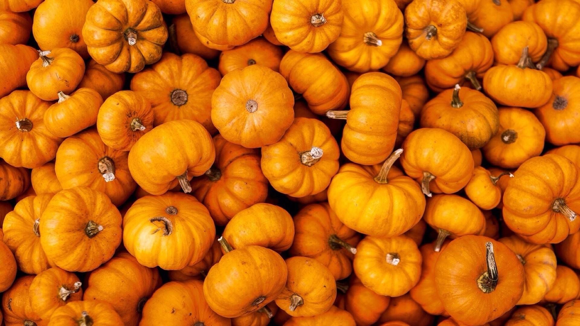 Pumpkin Free Wallpaper