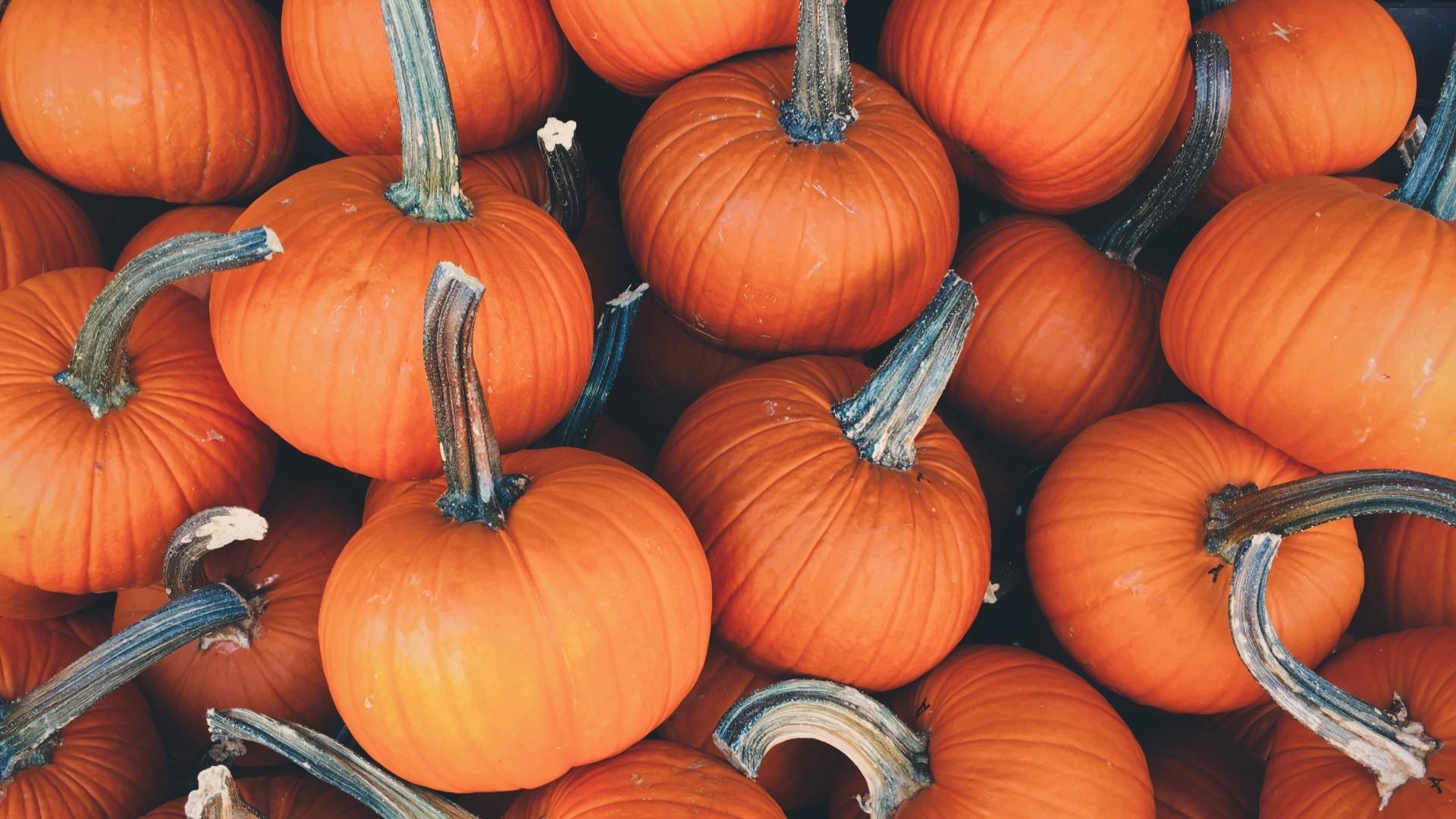 Pumpkin Wallpaper Picture hd