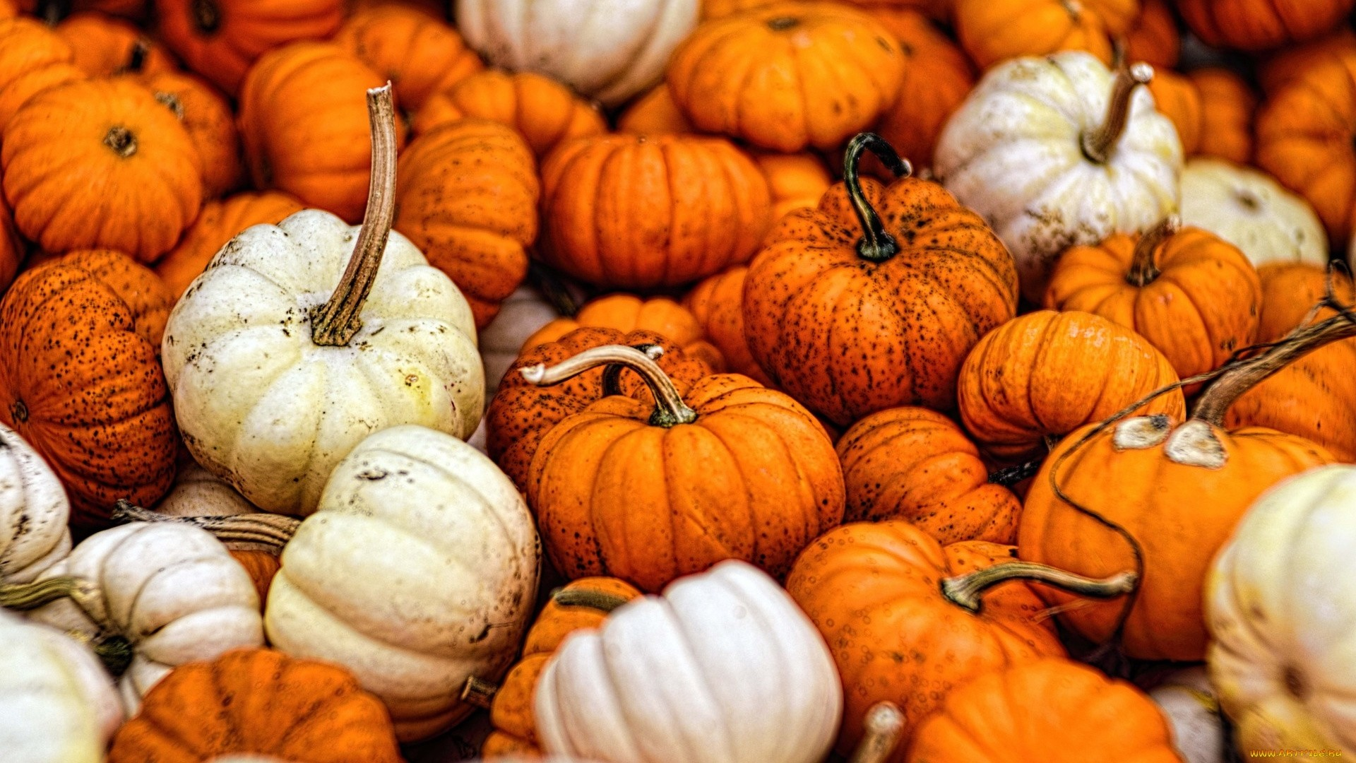 Pumpkin Free Wallpaper and Background