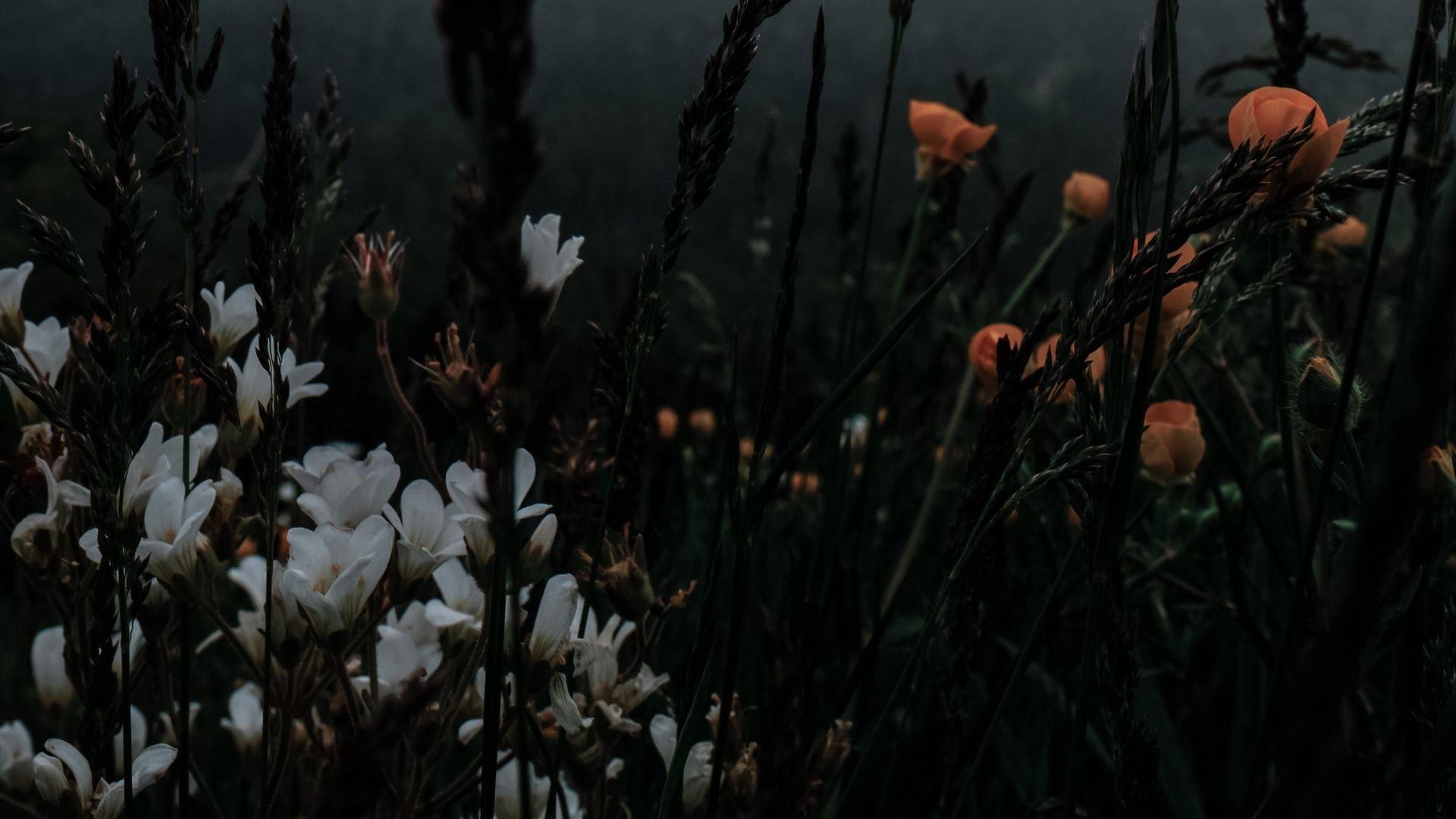 aesthetic flower 04