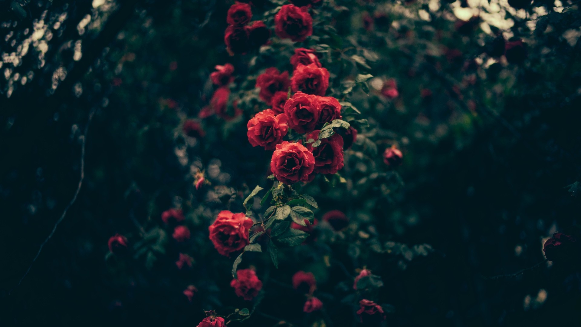 Aesthetic Flower Picture