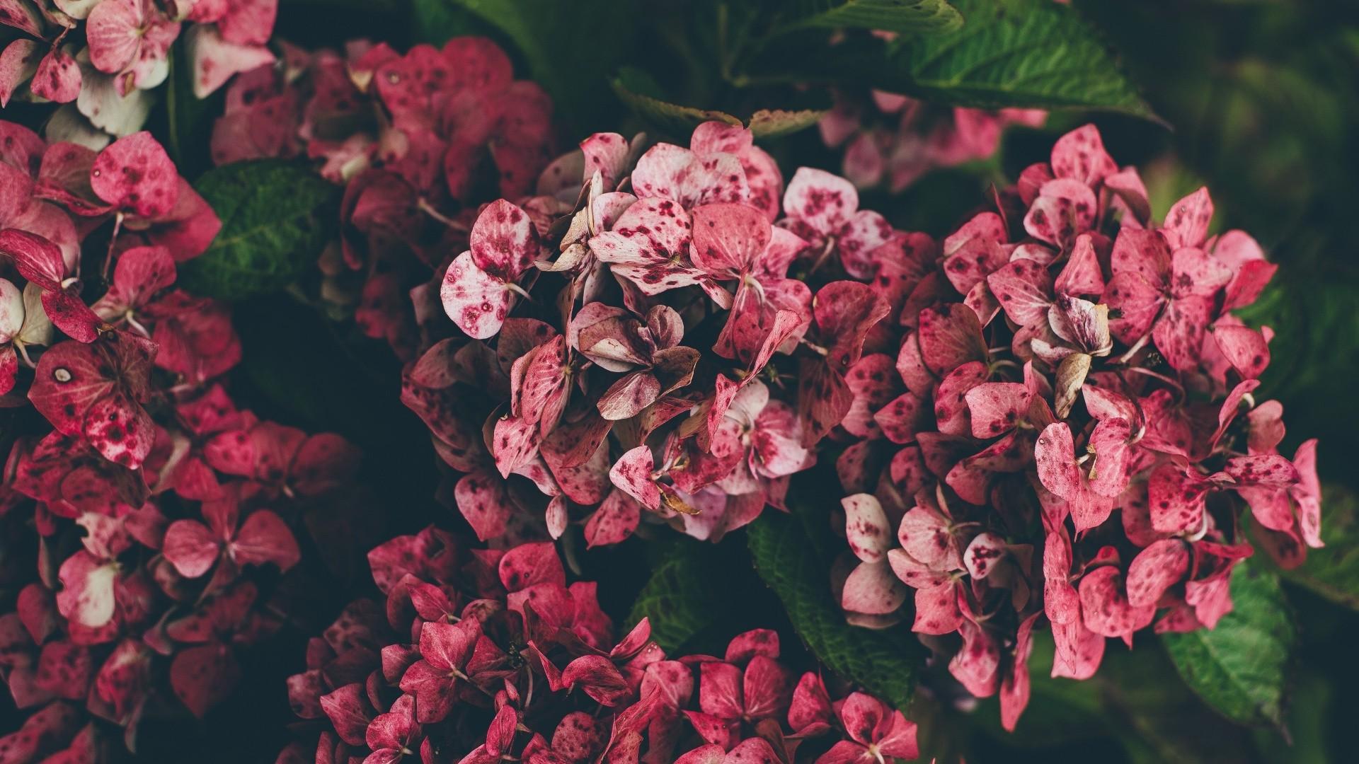 aesthetic flower 07