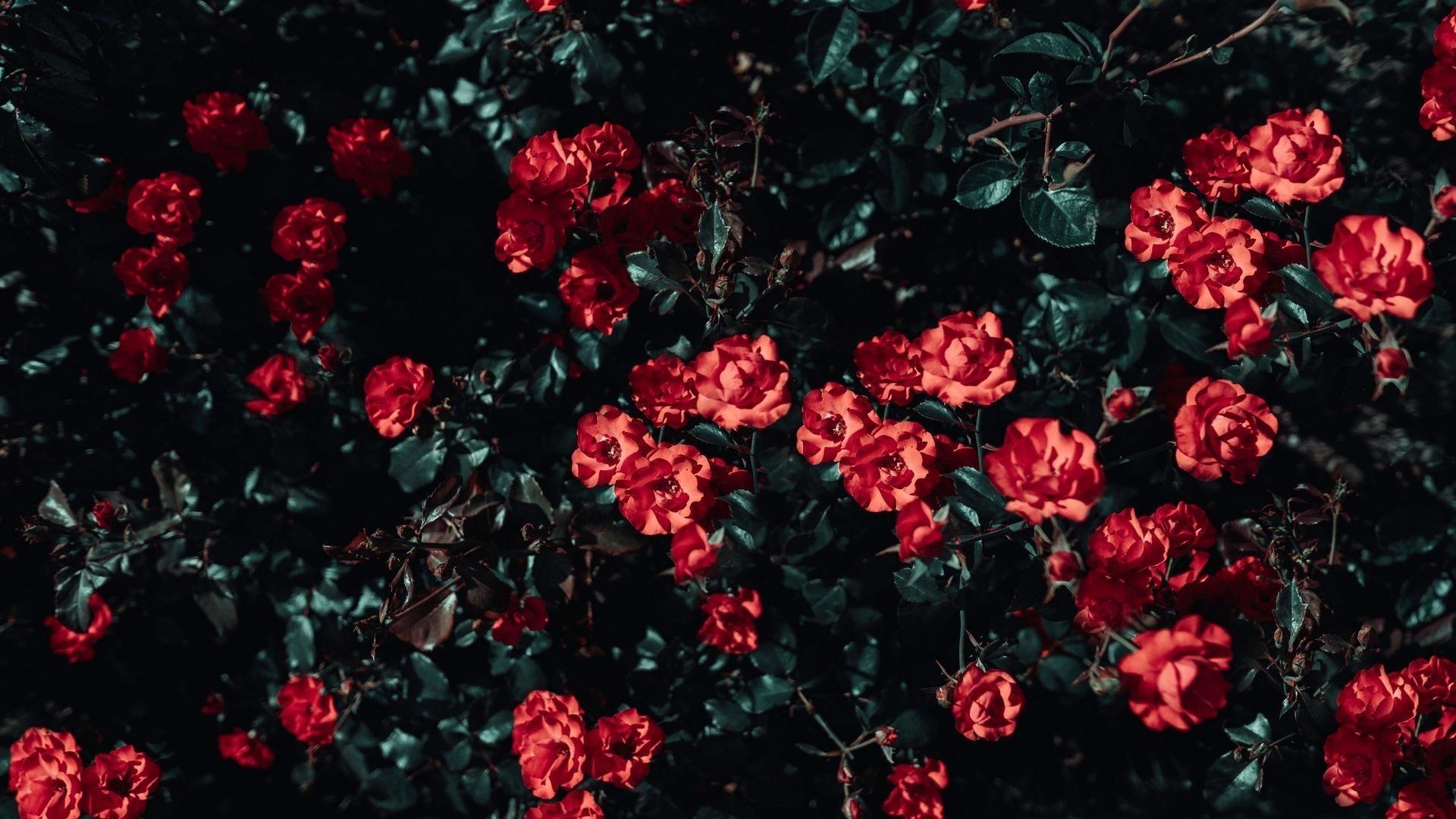 Aesthetic Flower Image