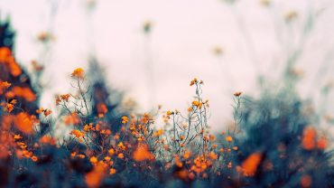Aesthetic Flower Free Wallpaper and Background