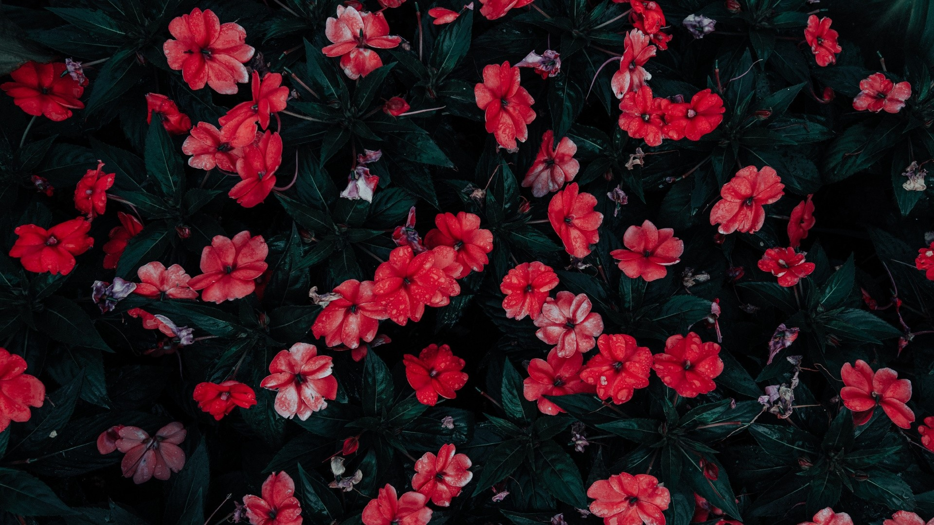 Aesthetic Flower Full HD Wallpaper
