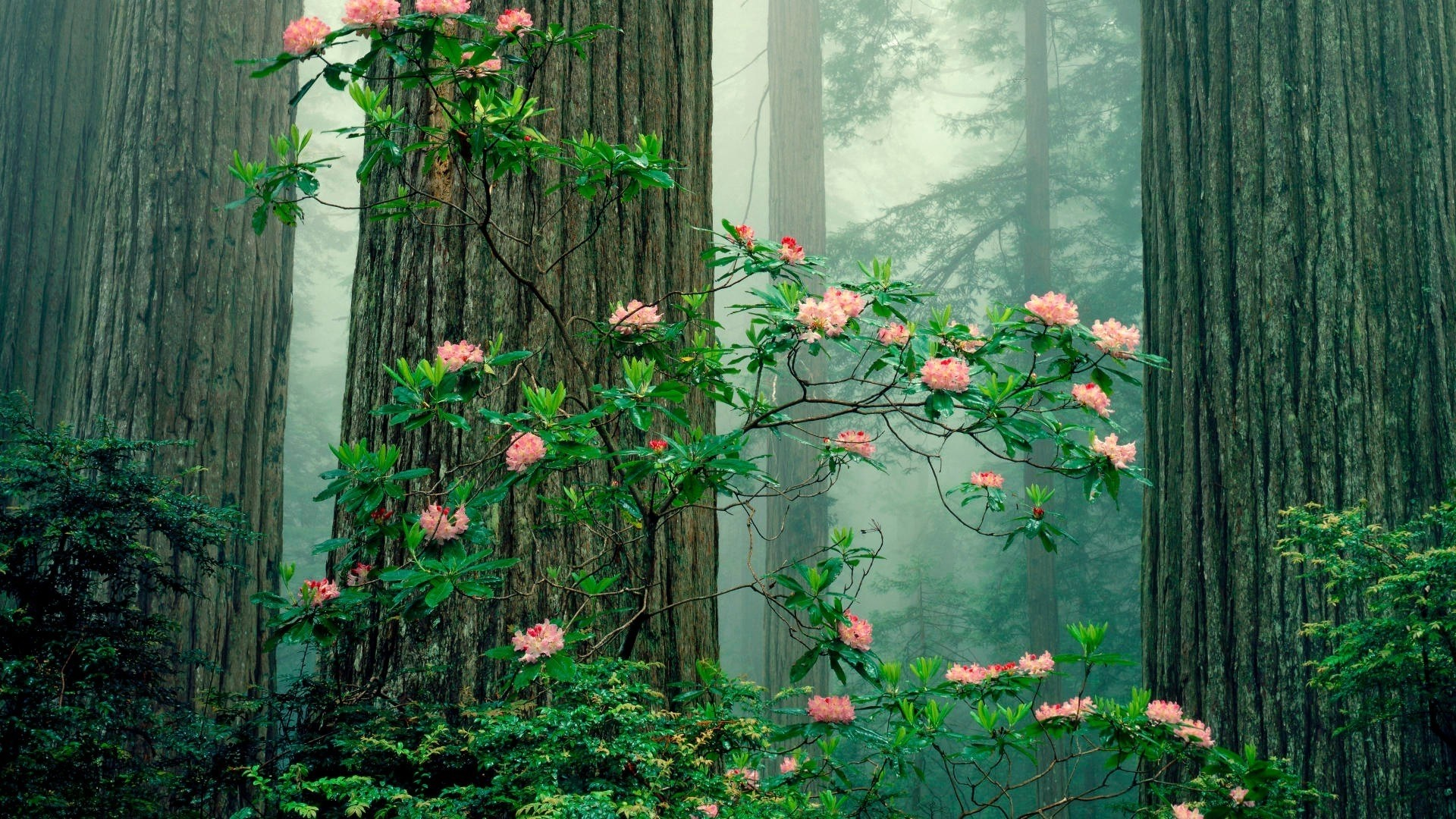 Aesthetic Flower Wallpaper for pc