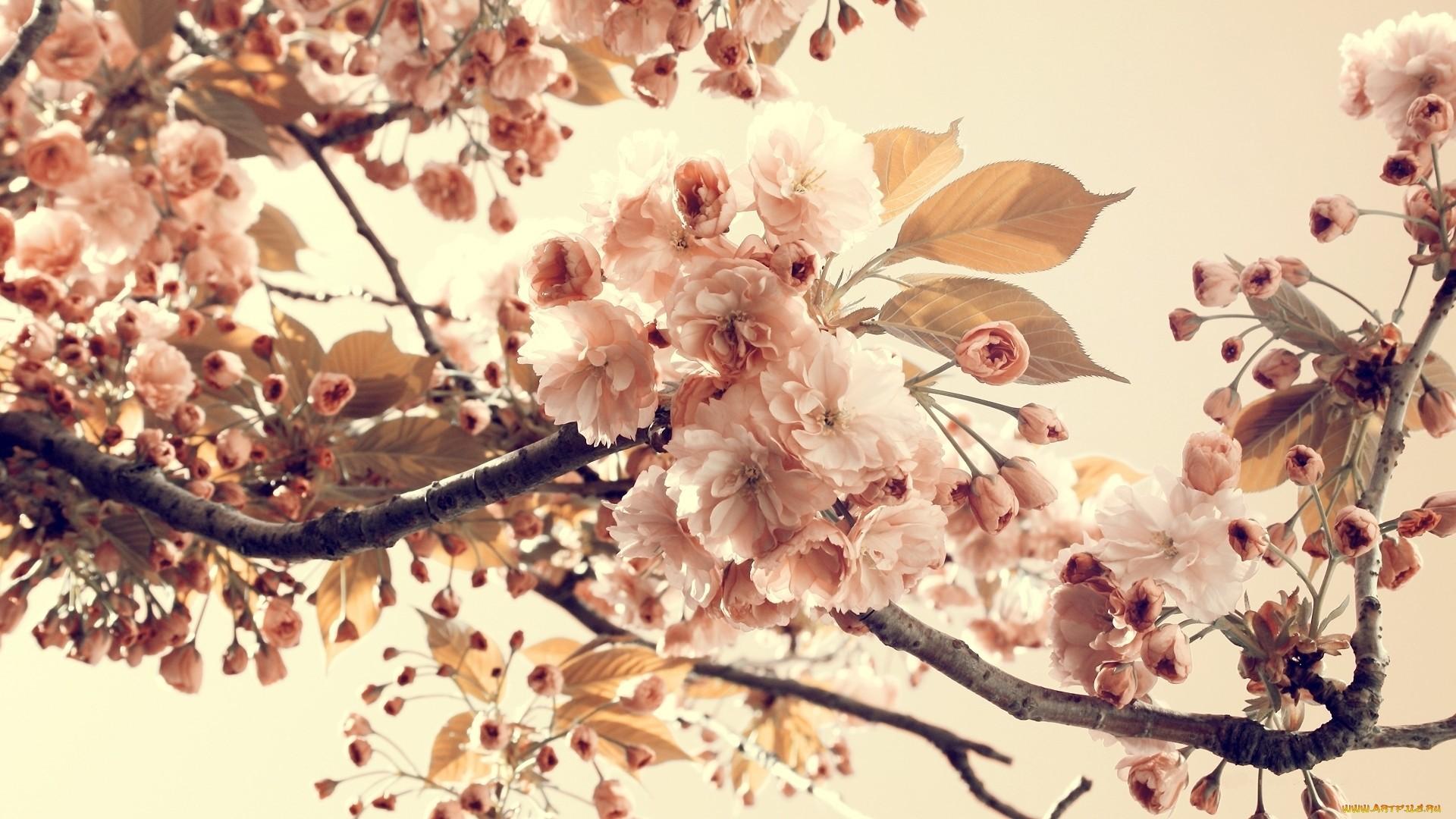 Aesthetic Flower Wallpaper image hd