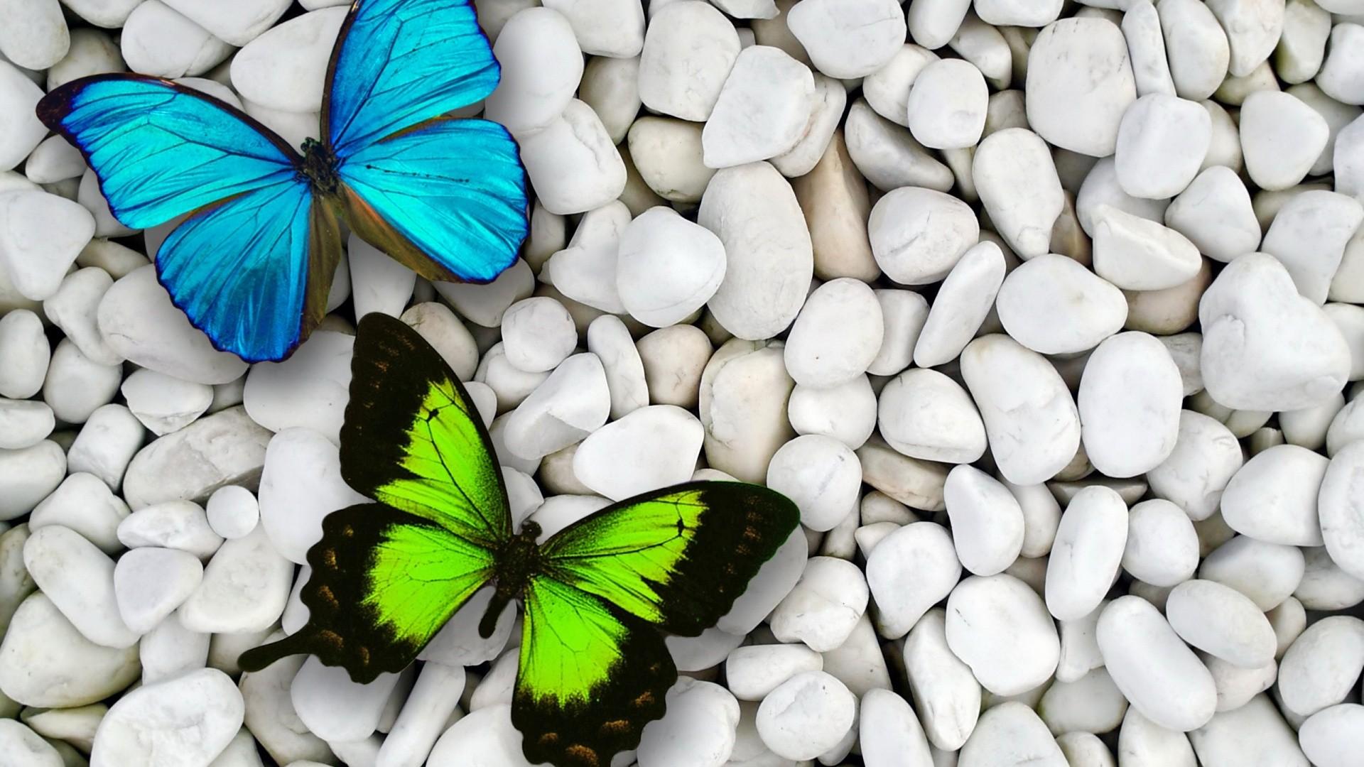Blue Butterfly Wallpaper