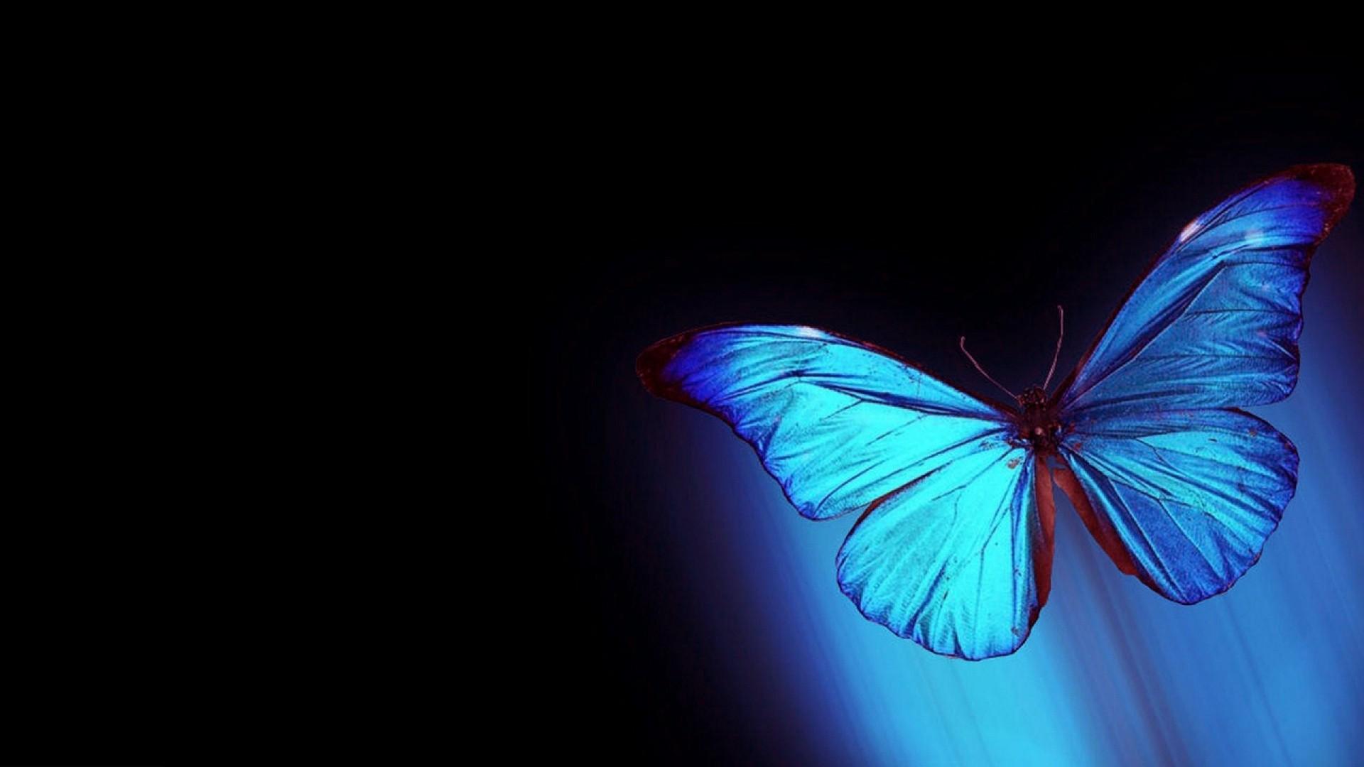 Blue Butterfly Wallpaper Picture hd