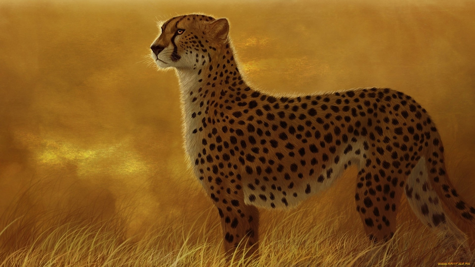 Cheetah hd wallpaper download