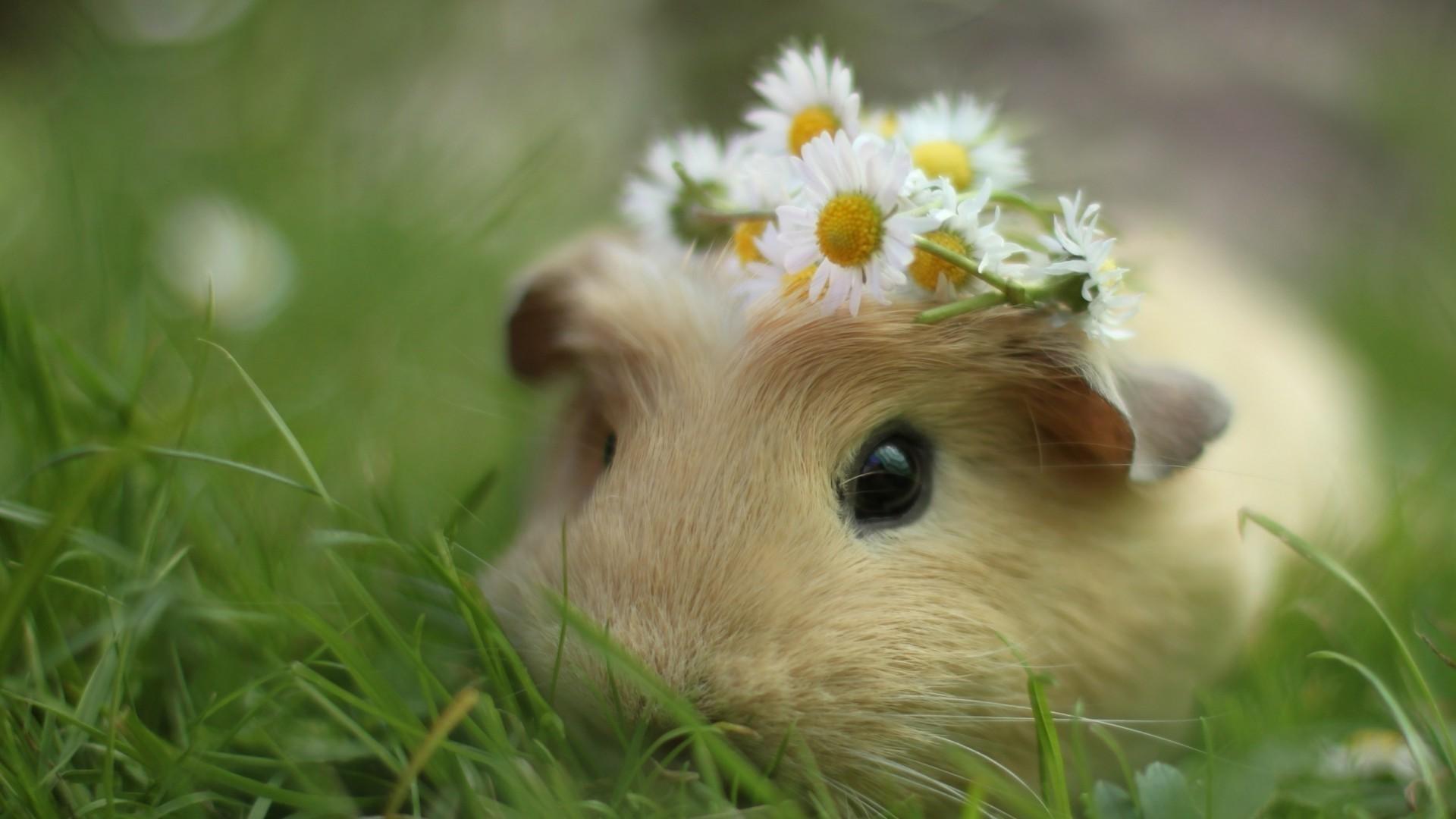 Cute Animal hd desktop wallpaper