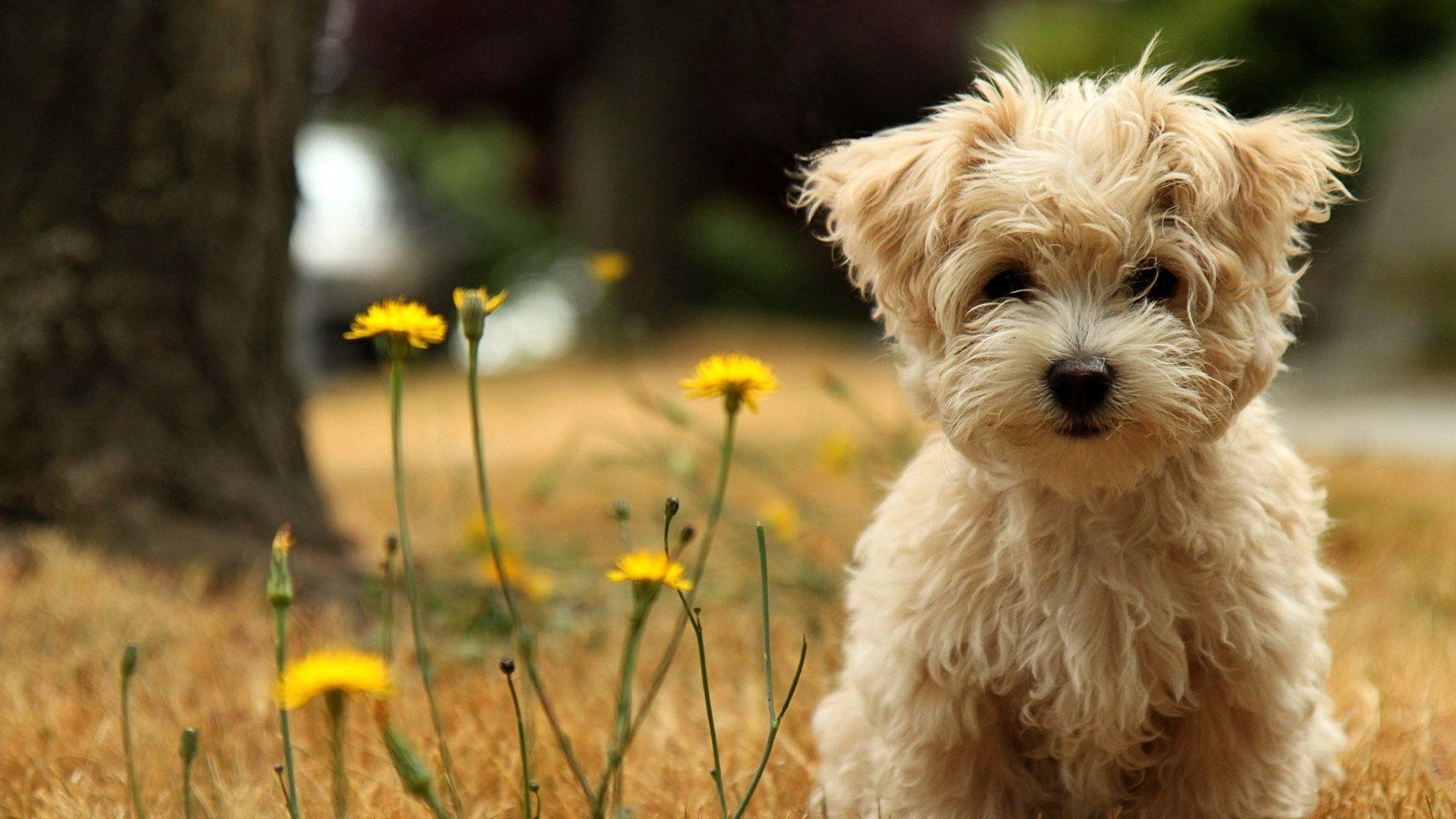 Cute Animal Background Wallpaper