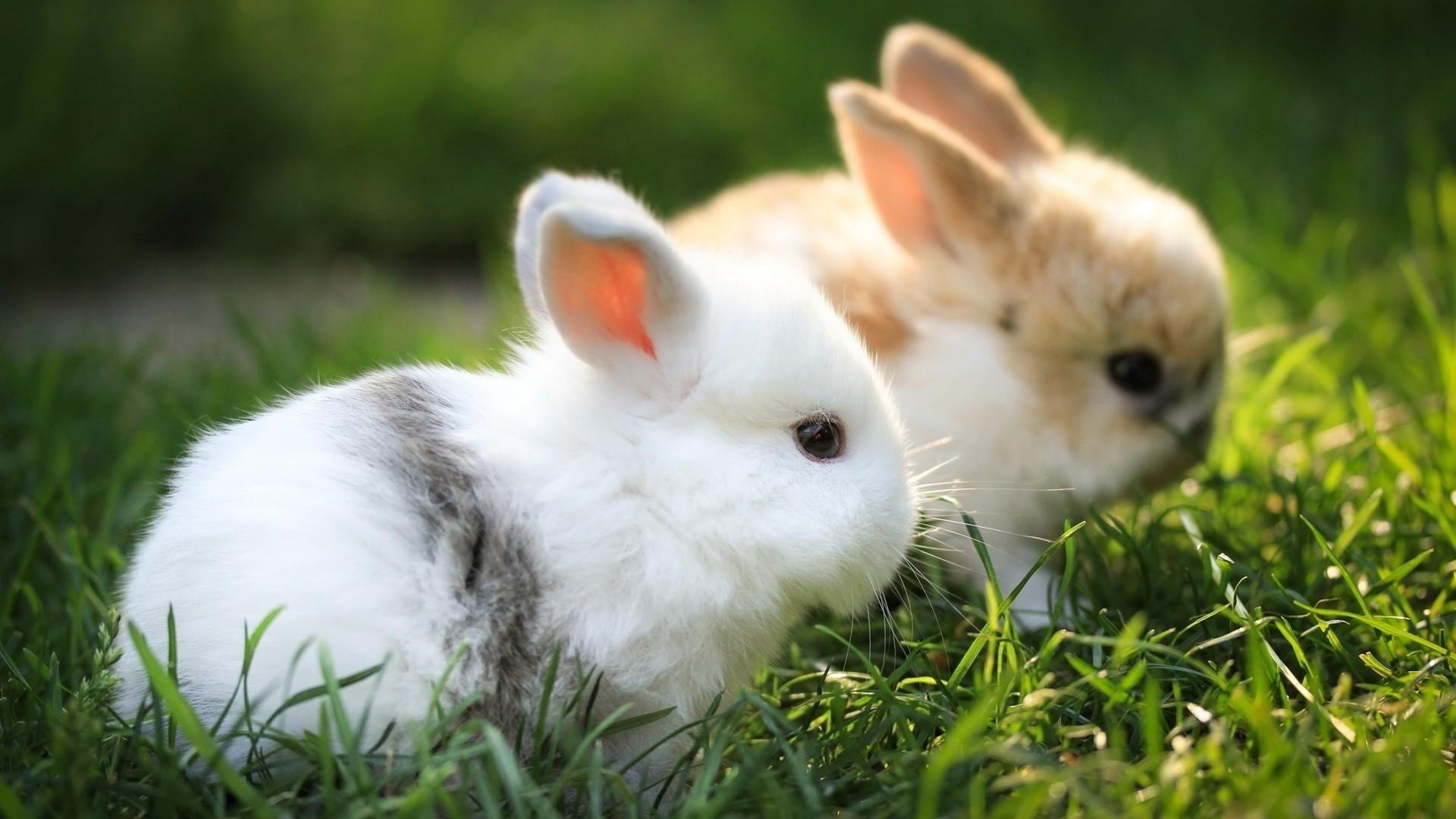 Cute Animal Pic