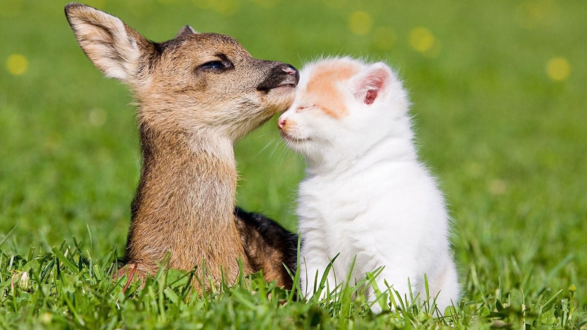 Cute Animal High Quality
