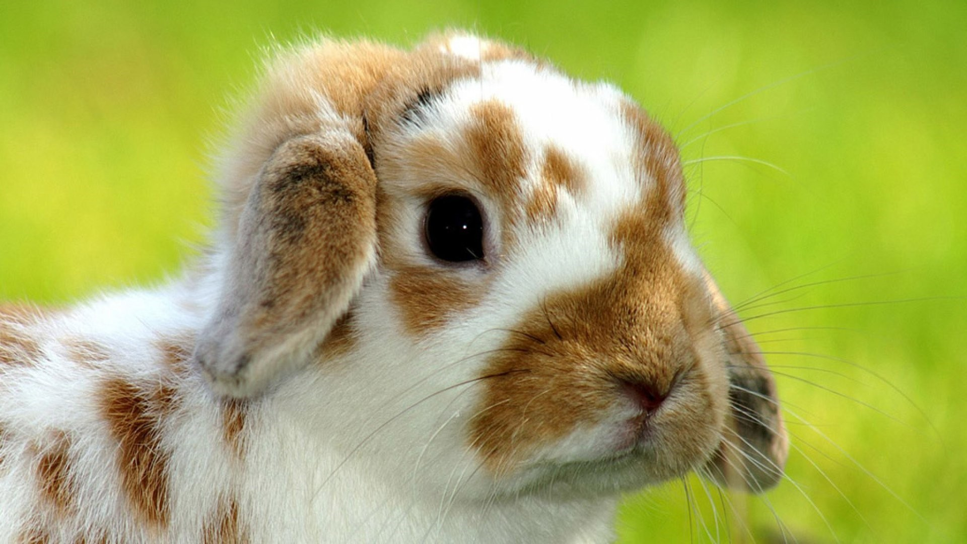 Cute Animal Free Wallpaper and Background