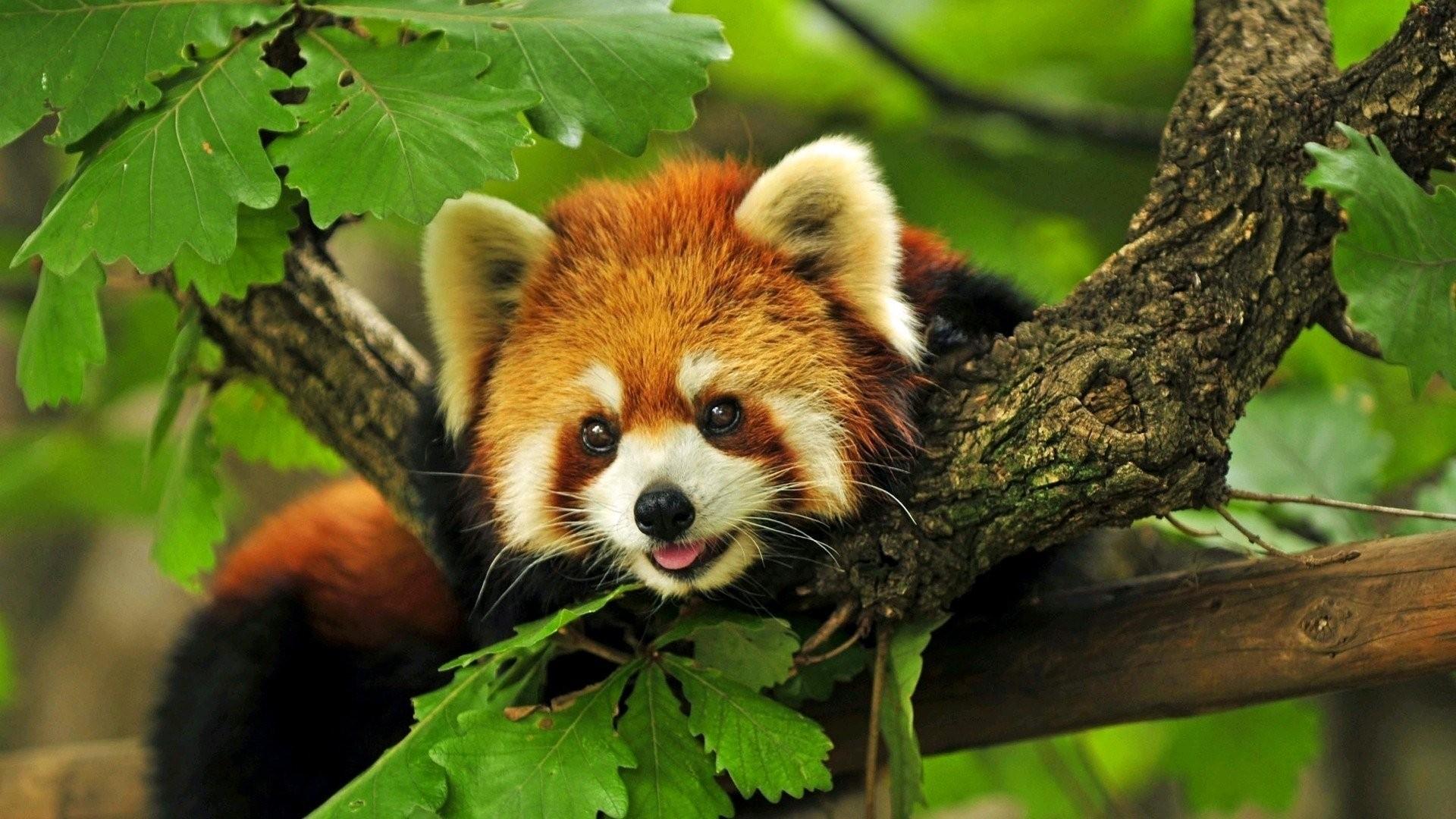 Cute Animal Image