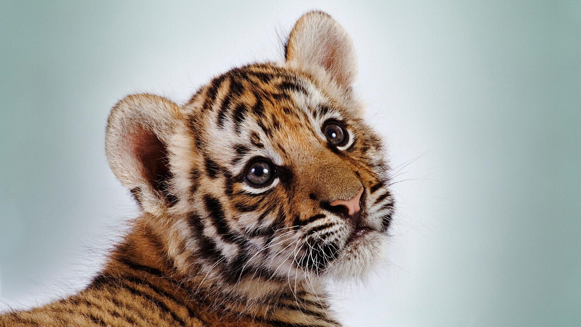 Cute Animal Free Wallpaper