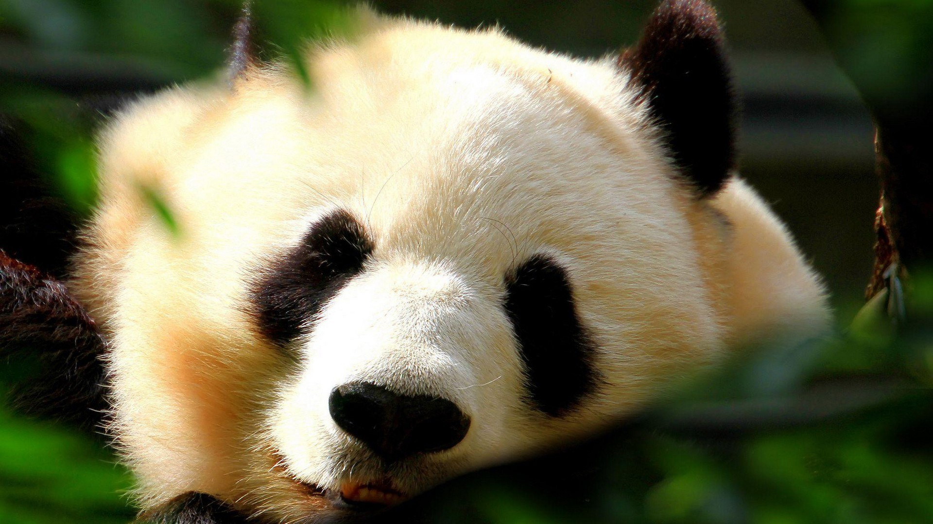 Cute Animal Wallpaper and Background
