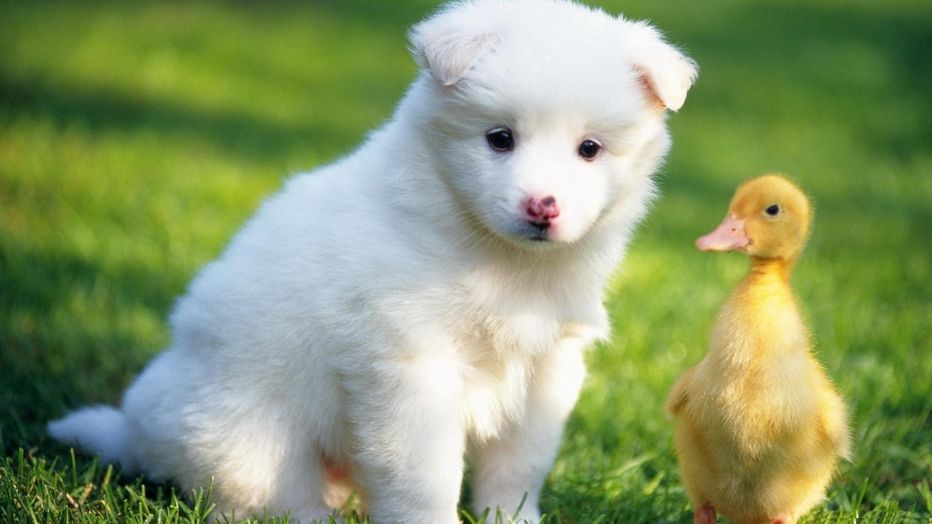 Cute Animal HD Wallpaper