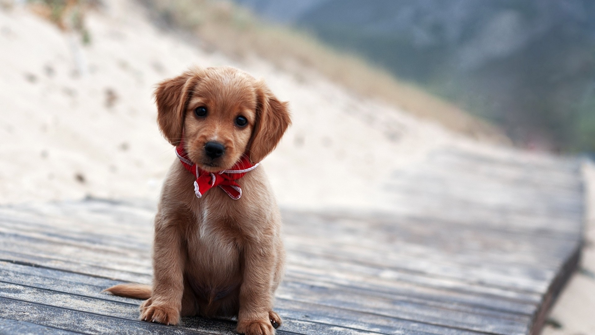 Cute Animal Picture