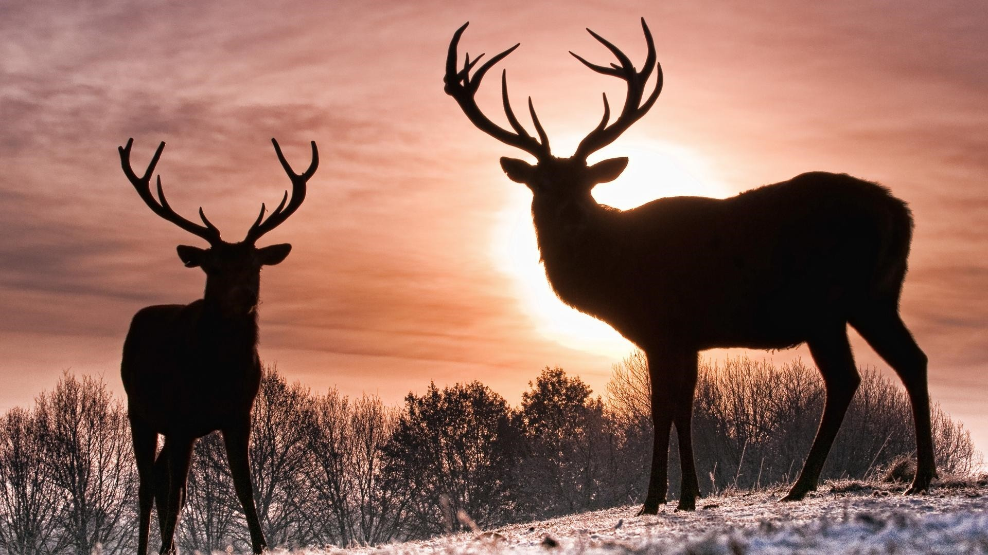 Deer a wallpaper