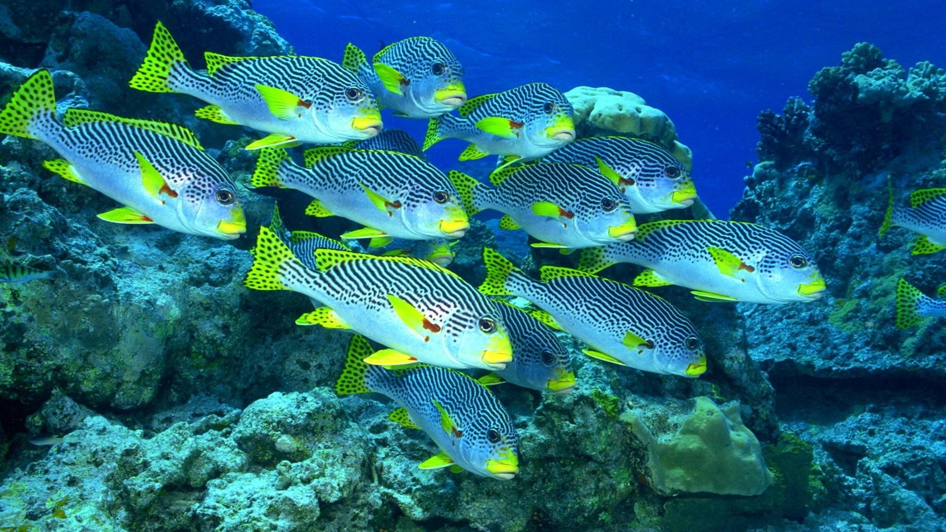 Fish Wallpaper Picture hd