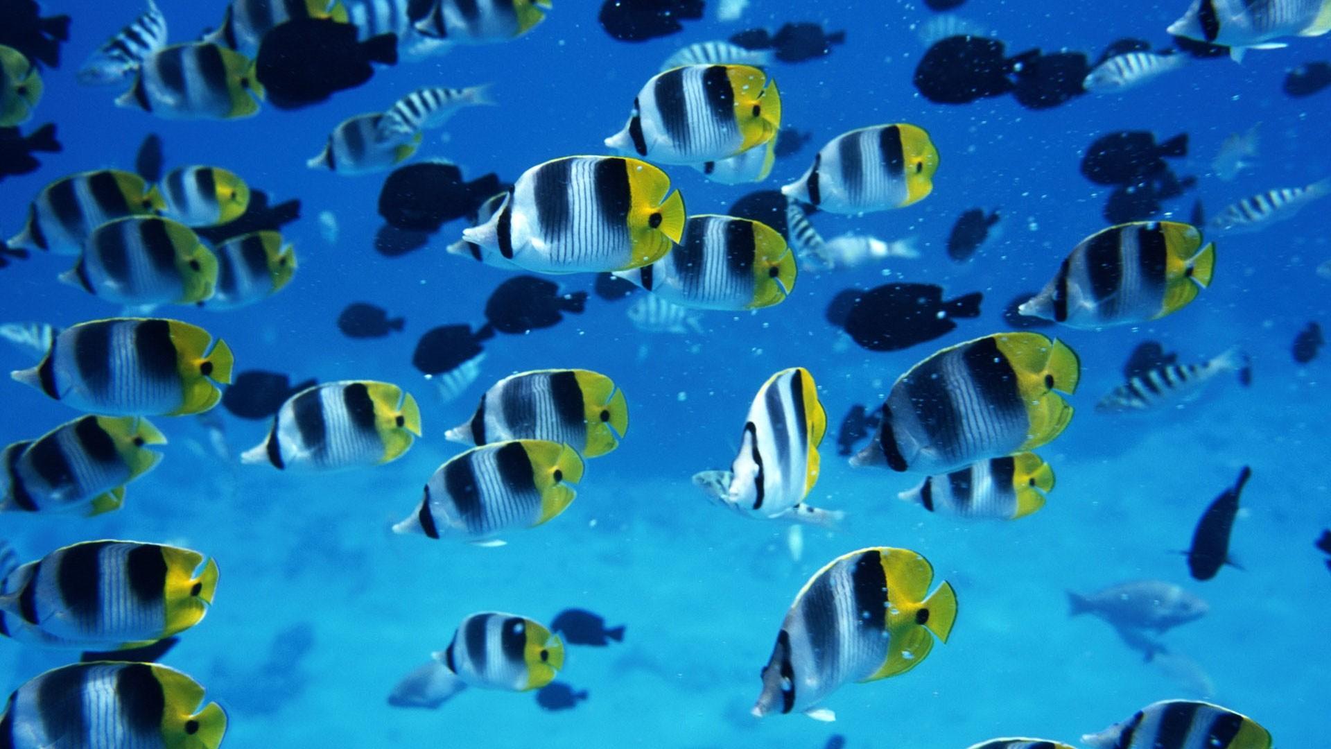 Fish computer wallpaper